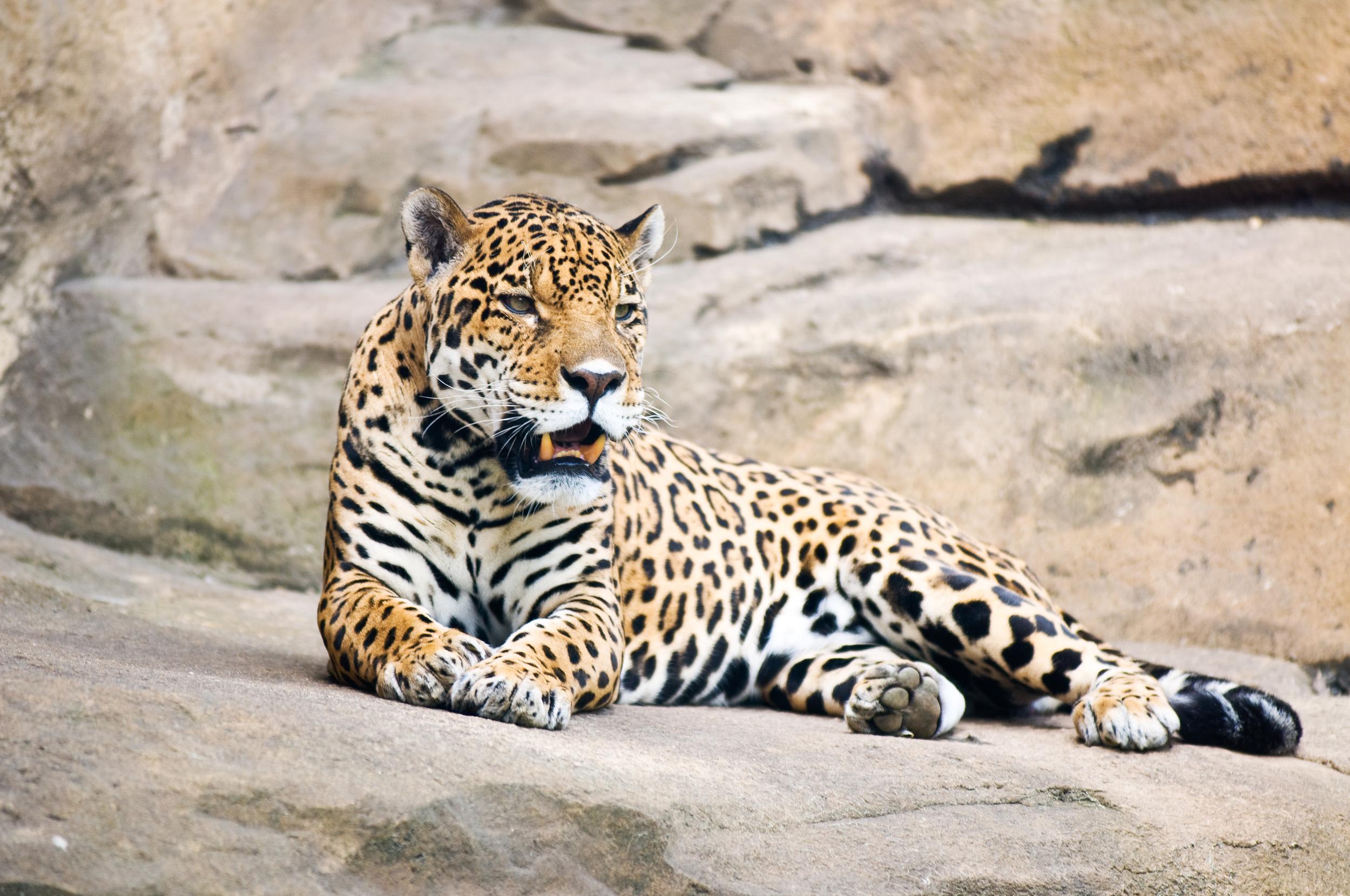 invite-to-paradise-sri-lanka-honeymoon-holiday-wildlife-leopard-safari-4.jpg