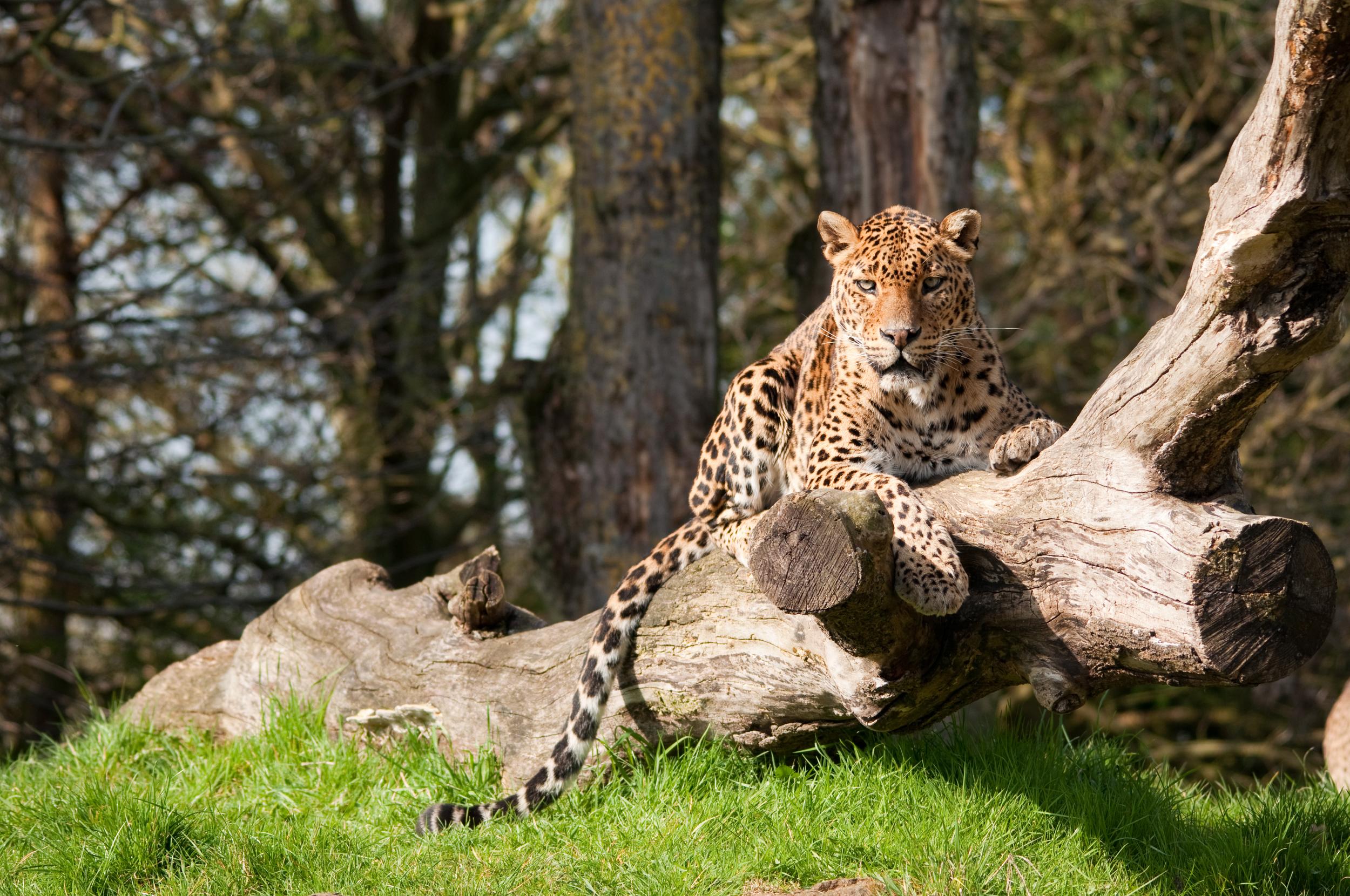 invite-to-paradise-sri-lanka-honeymoon-holiday-wildlife-leopard-safari-6.jpg