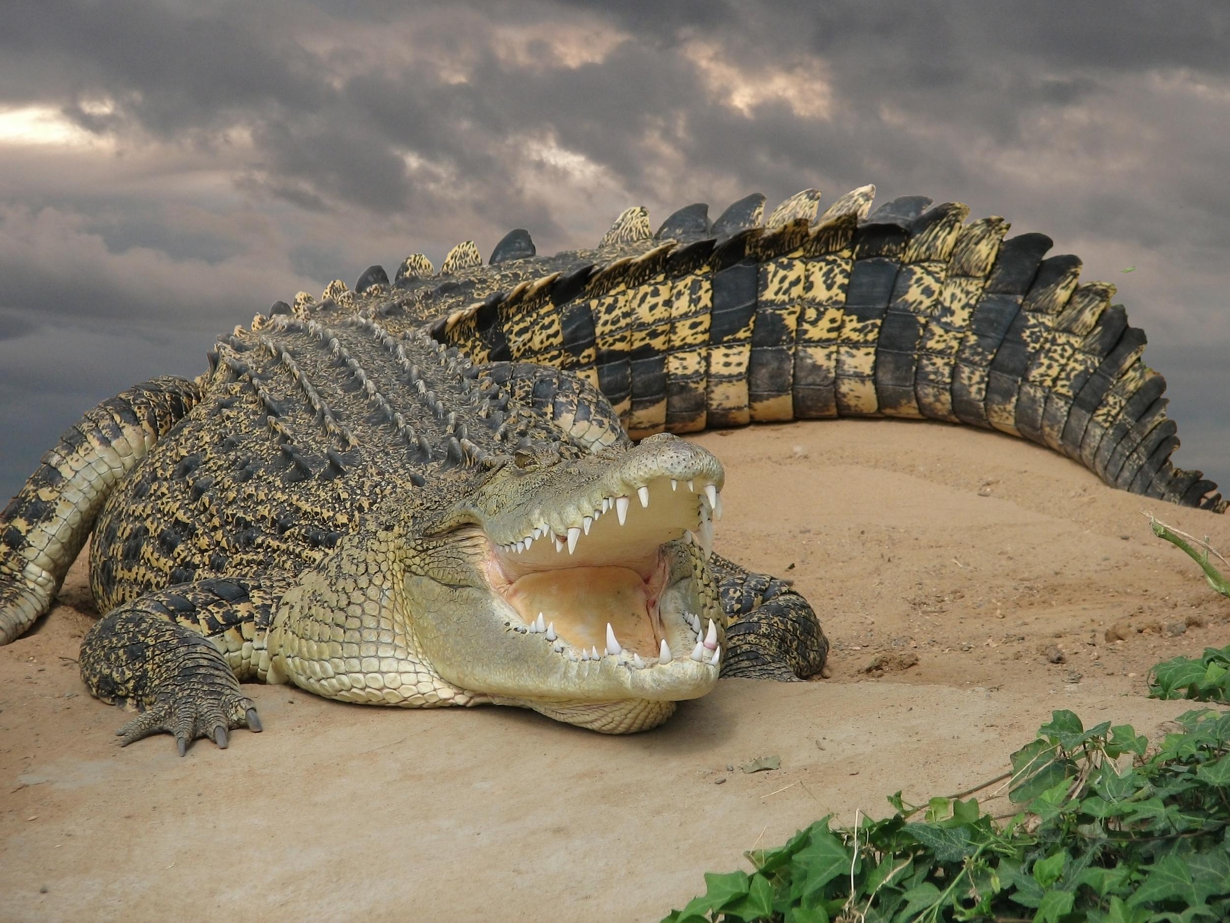 invite-to-paradise-sri-lanka-honeymoon-holiday-wildlife-safari-crocodile.jpg