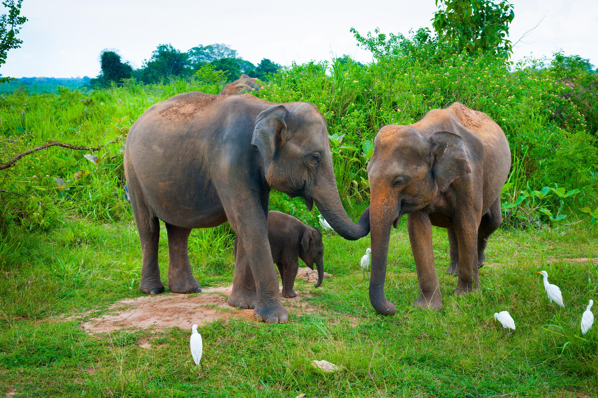 invite-to-paradise-sri-lanka-honeymoon-holiday-elephant-safari-wild-family.jpg