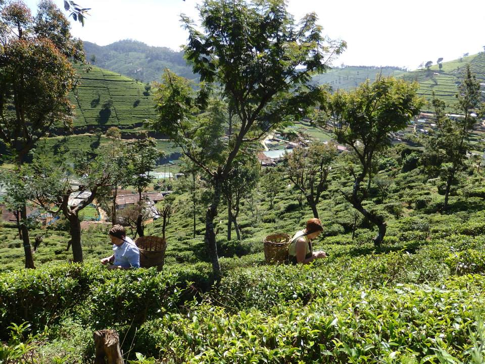 invite-to-paradise-customer-review-claire-simon-honeymoon-sri-lanka-tea-picking.jpg