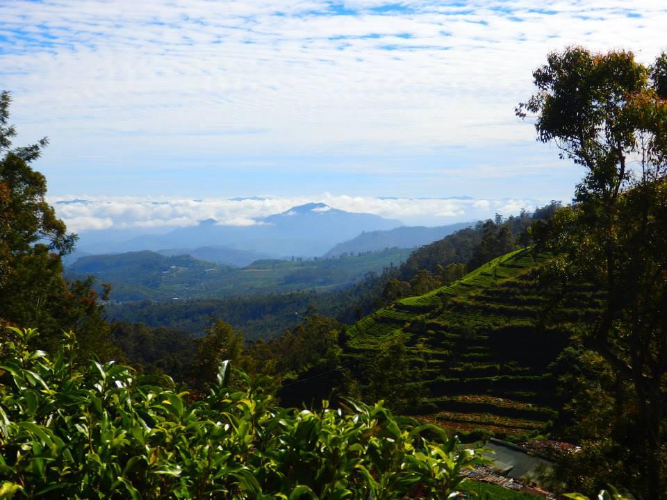 invite-to-paradise-customer-review-claire-simon-honeymoon-sri-lanka-tea-plantation-2.jpg