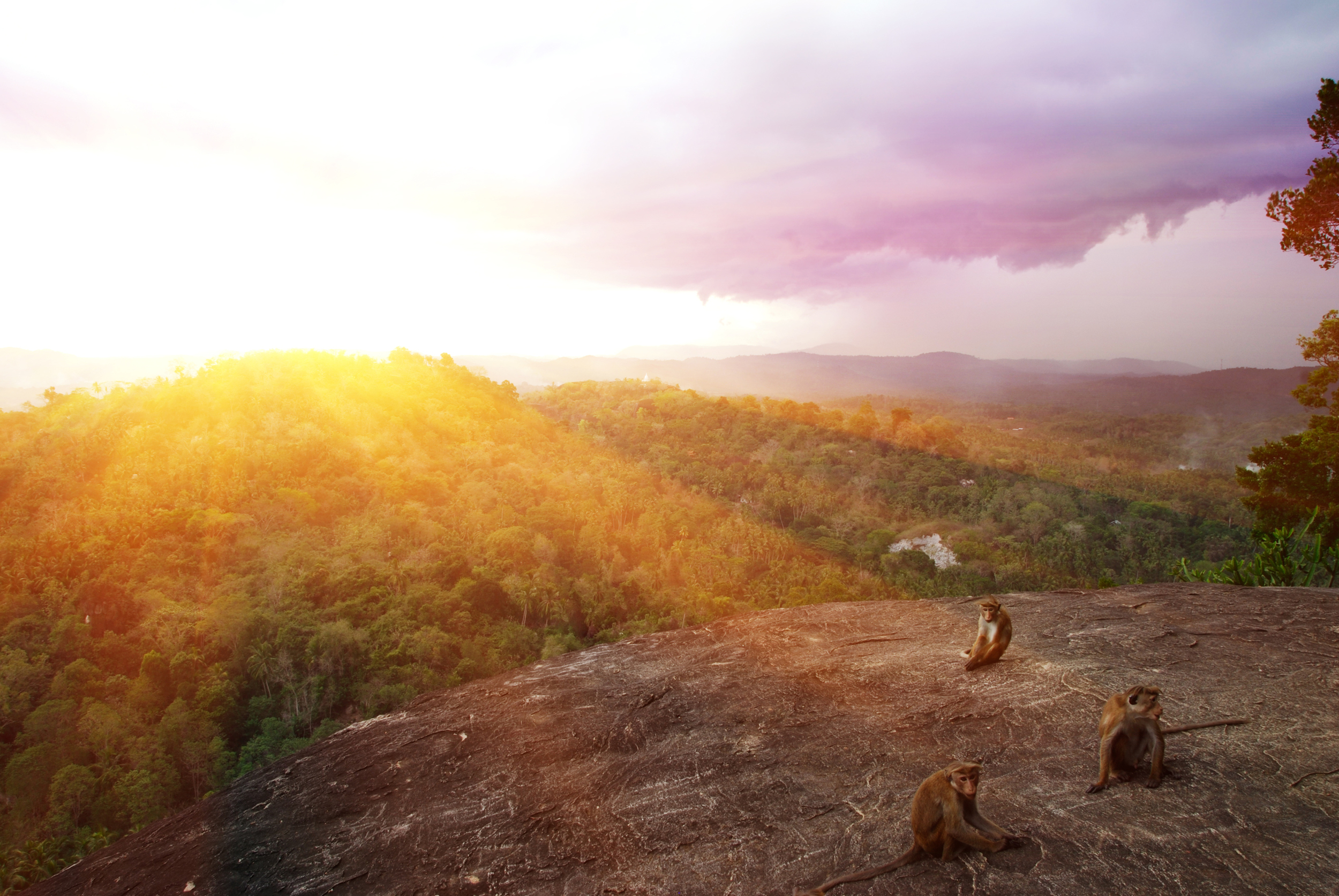 invite-to-paradise-sri-lanka-holiday-honeymoon-cultural-triangle-dambulla-cave-temple-view-monkeys.jpg