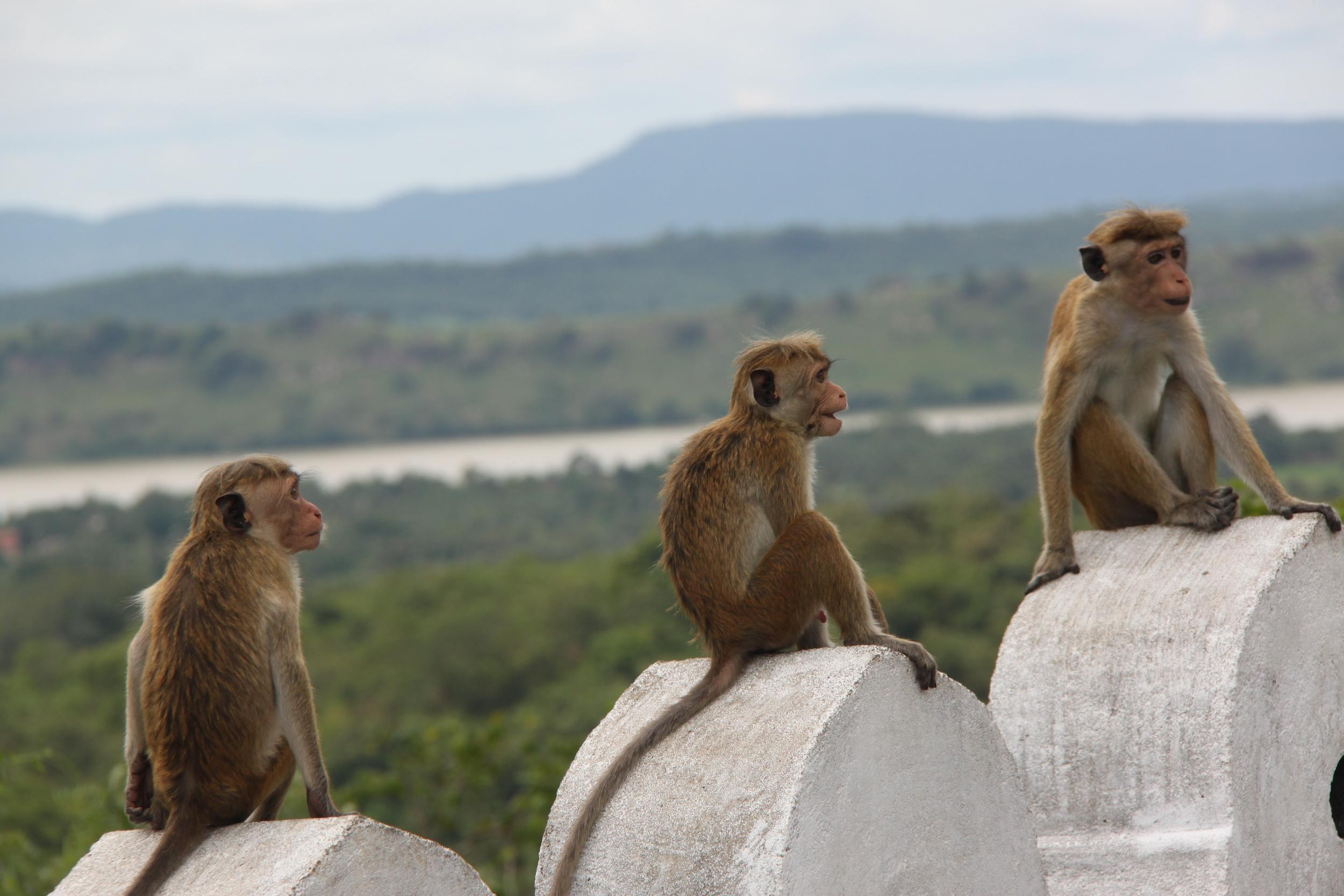 invite-to-paradise-sri-lanka-holiday-honeymoon-cultural-triangle-dambulla-cave-temple-view-monkeys-2.jpg