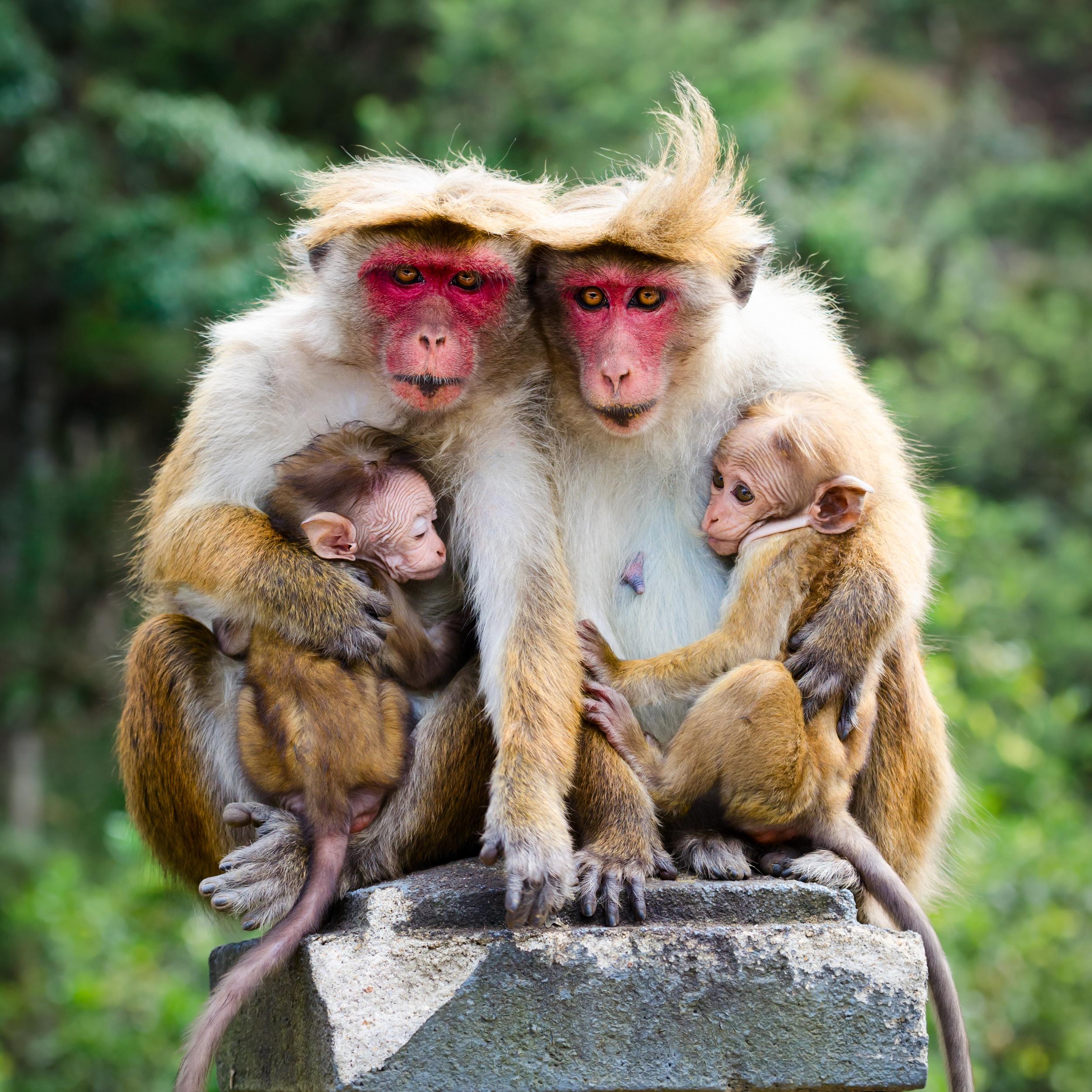 invite-to-paradise-sri-lanka-holiday-honeymoon-cultural-triangle-dambulla-cave-temple-view-monkeys-3.jpg