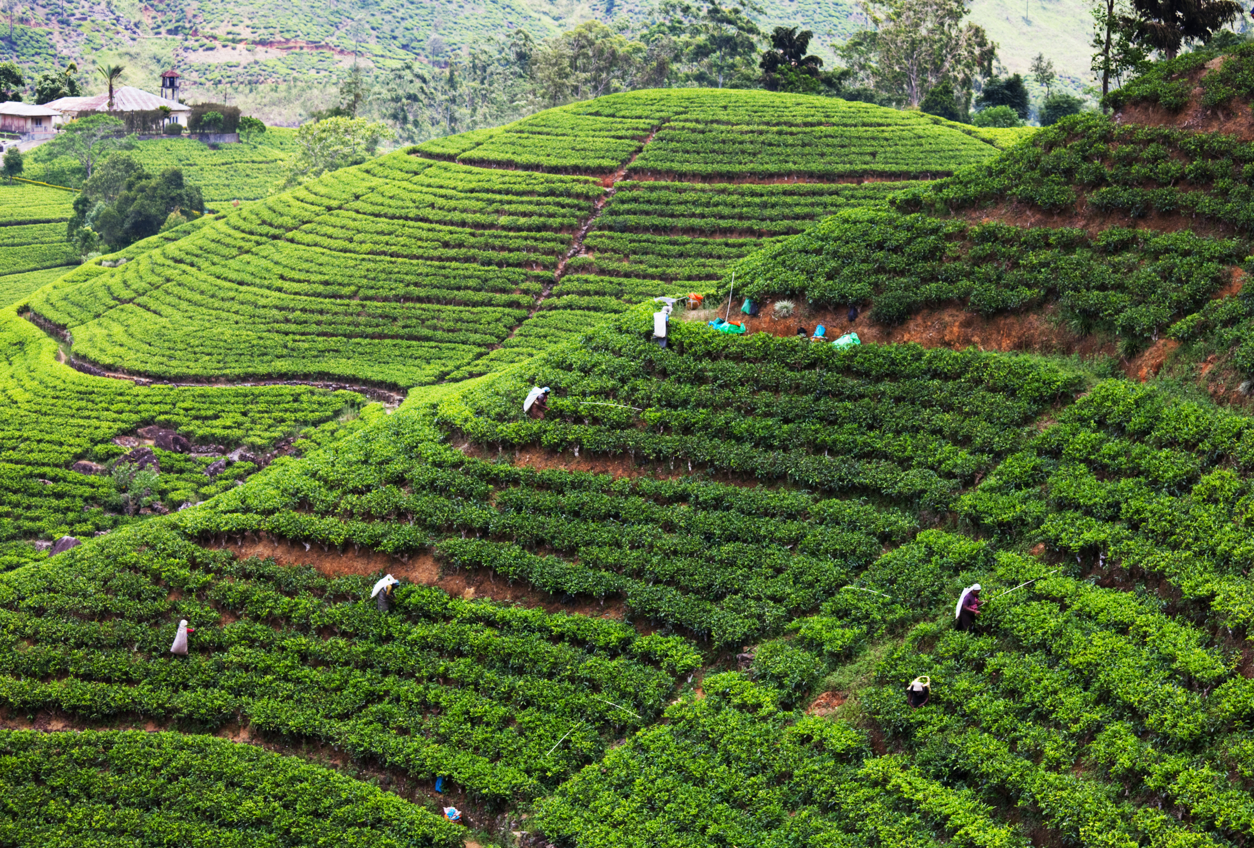 invite-to-paradise-sri-lanka-holiday-honeymoon-tea-plantations-mountains-11.jpg