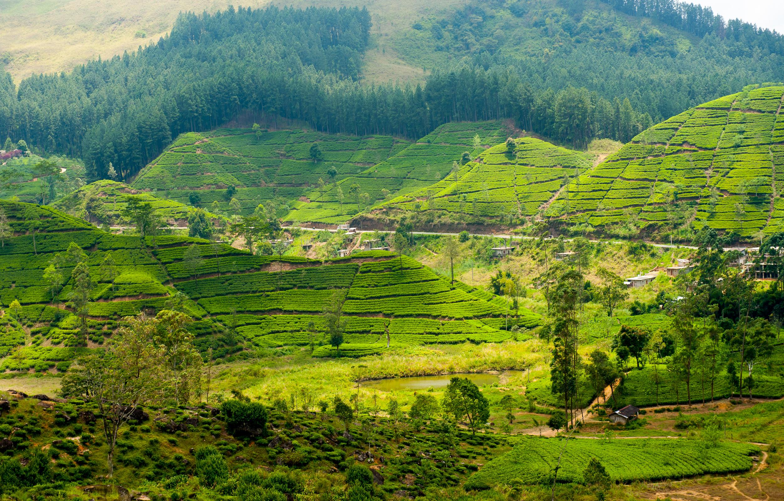 invite-to-paradise-sri-lanka-holiday-honeymoon-tea-plantations-mountains-14.jpg