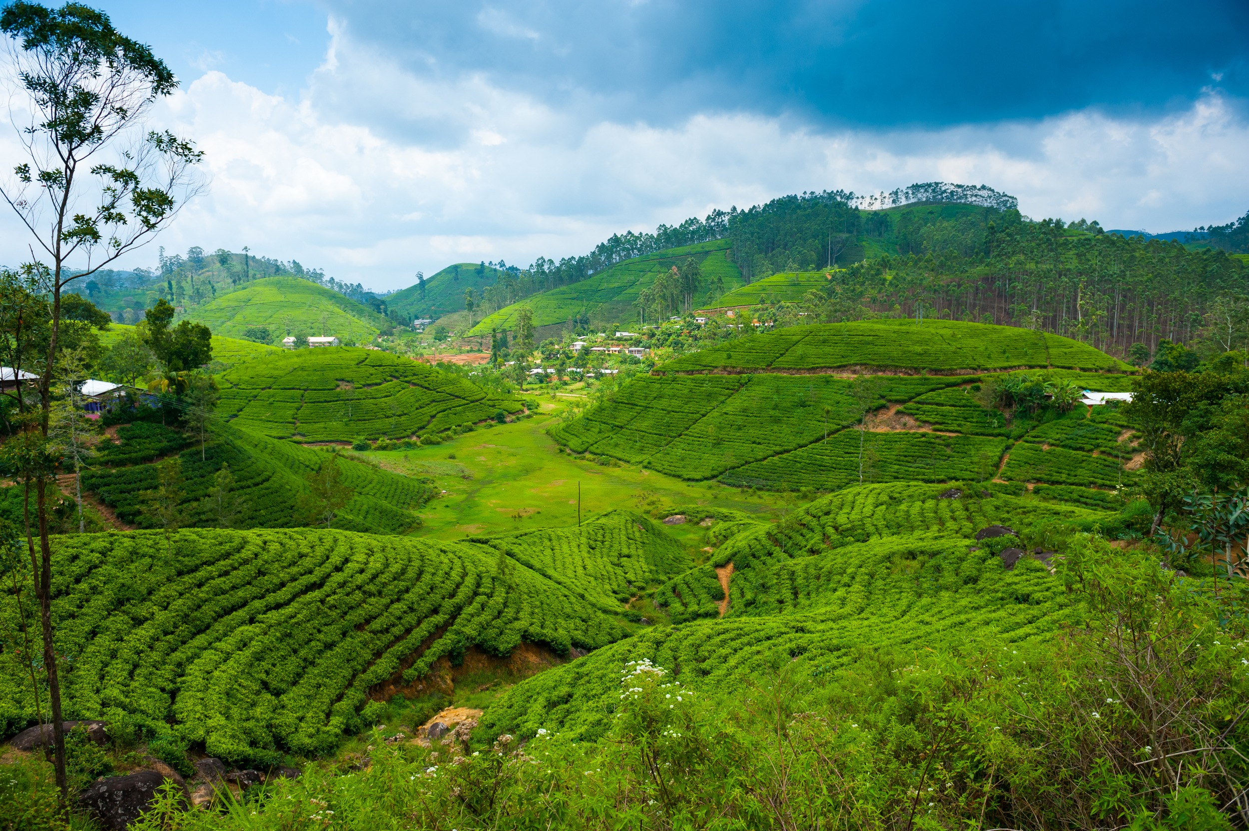 invite-to-paradise-sri-lanka-holiday-honeymoon-tea-plantations-mountains-16b.jpg