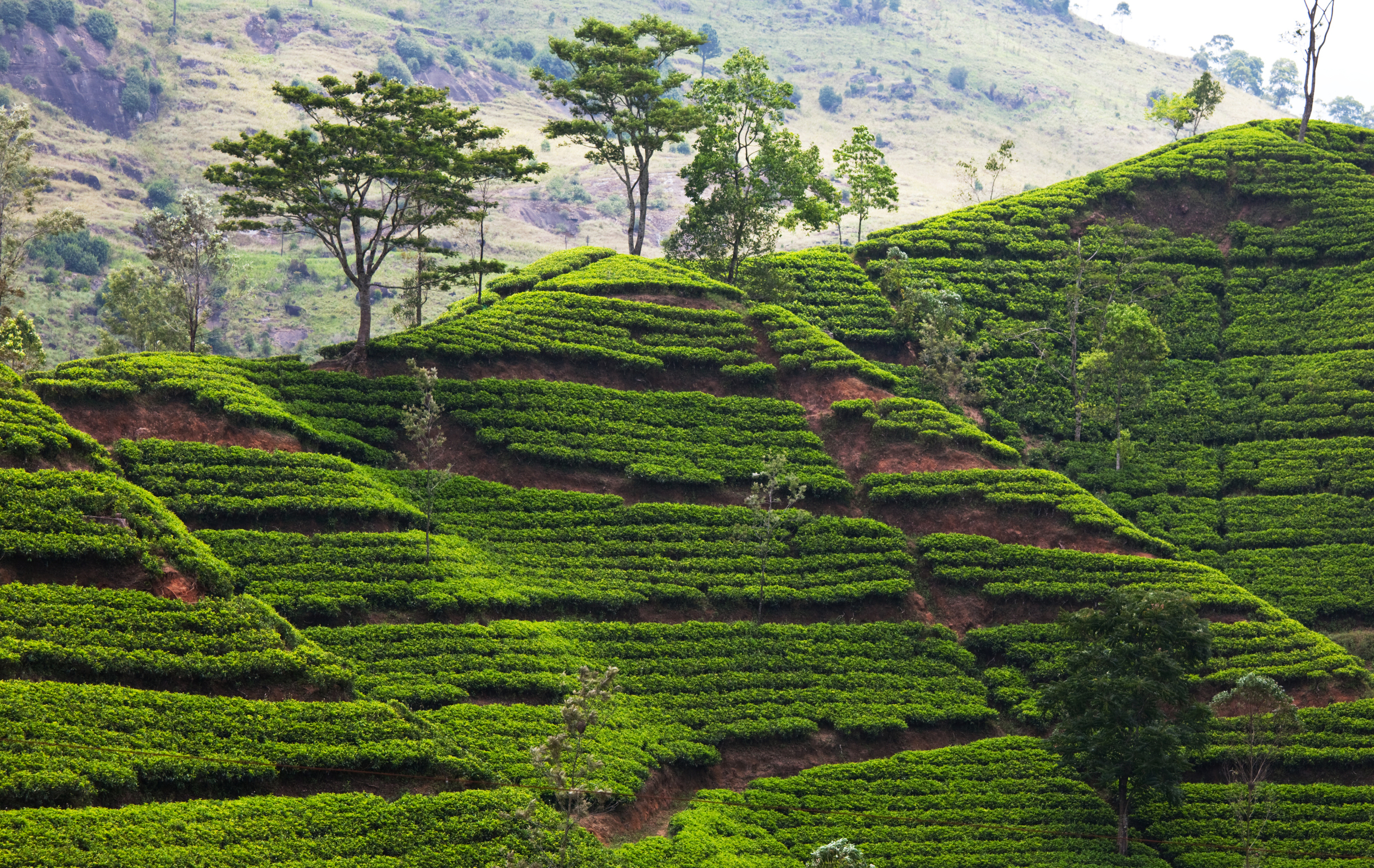invite-to-paradise-sri-lanka-holiday-honeymoon-tea-plantations-mountains-18.jpg