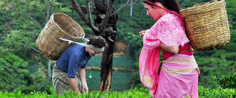 invite-to-paradise-sri-lanka-holidays-honeymoons-heritance-tea-plantation-hotel-tea-factory-tea-plucking-4.jpg