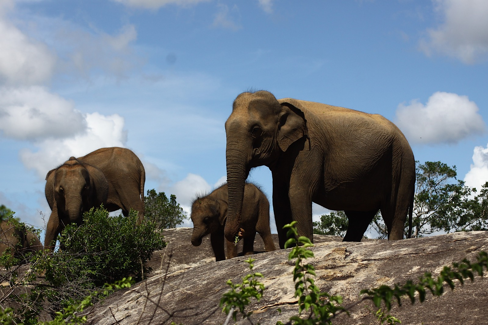 invite-to-paradise-holiday-honeymoon-sri-lanka-specialists-safari-lodge-cinnamon-wild-hotel-11.jpg