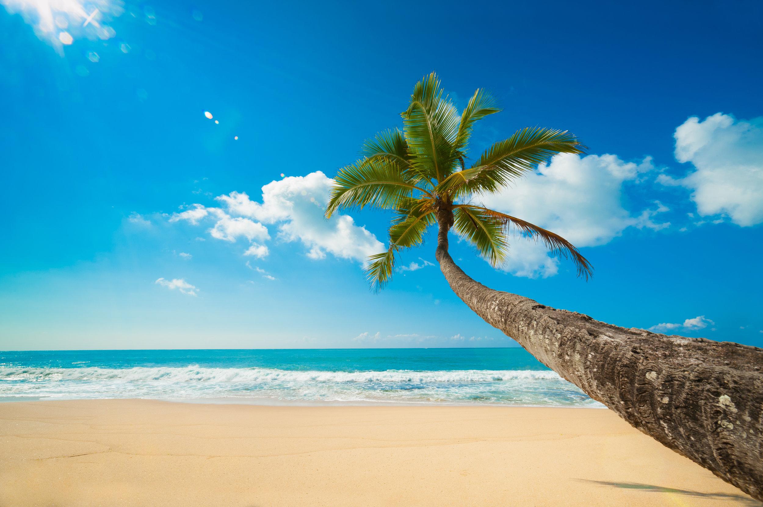 invite-to-paradise-sri-lanka-and-maldives-specialists-tour-operator-travel-agent-holidays-honeymoons-beach-wildlife-safari-culture.jpg