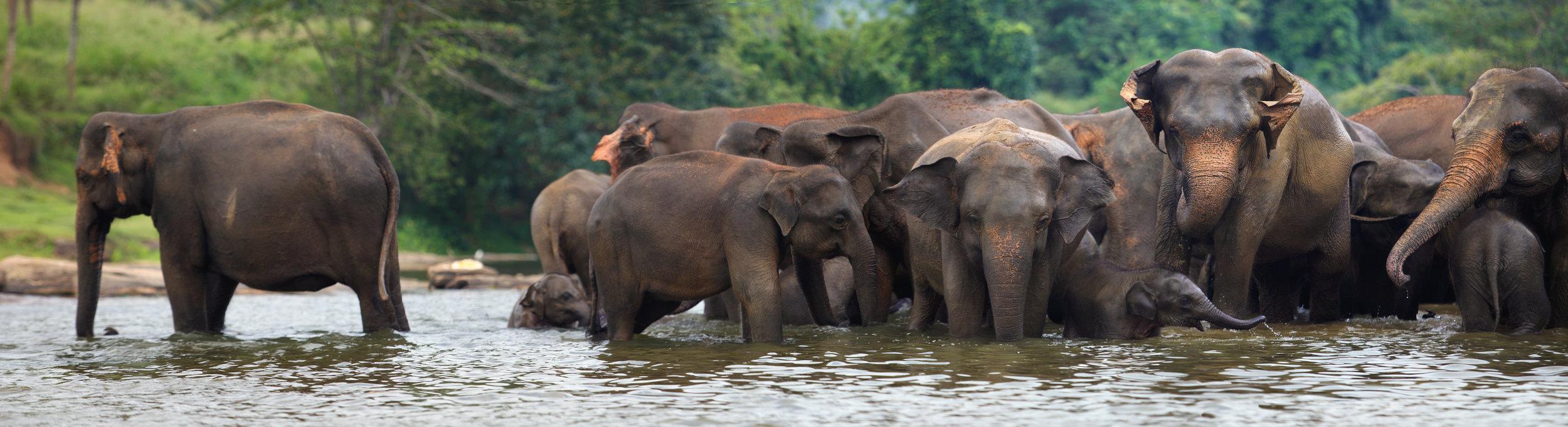 invite-to-paradise-sri-lanka-holiday-honeymoon-specialists-srilankan-elephants-river.jpg