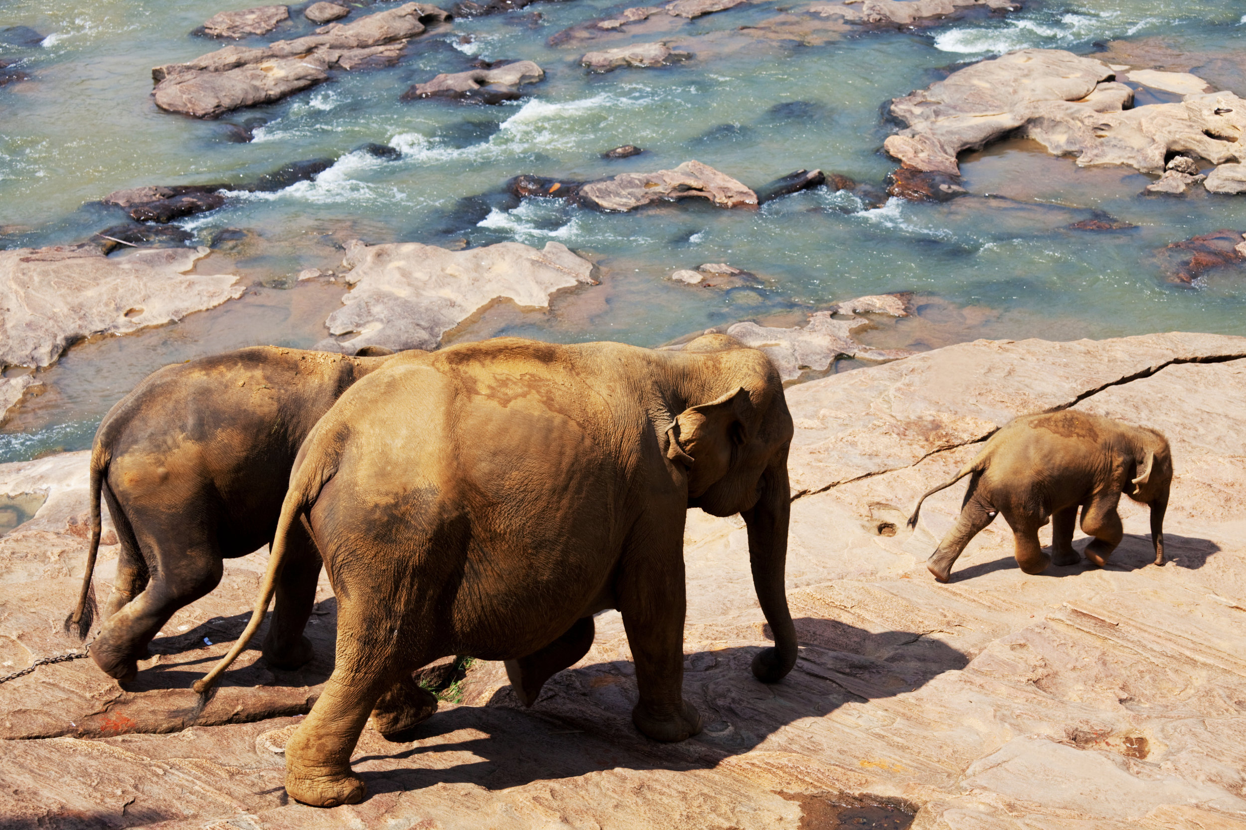 pinnawala-elephant-orphanage-sri-lanka-invite-to-paradise-river.jpg