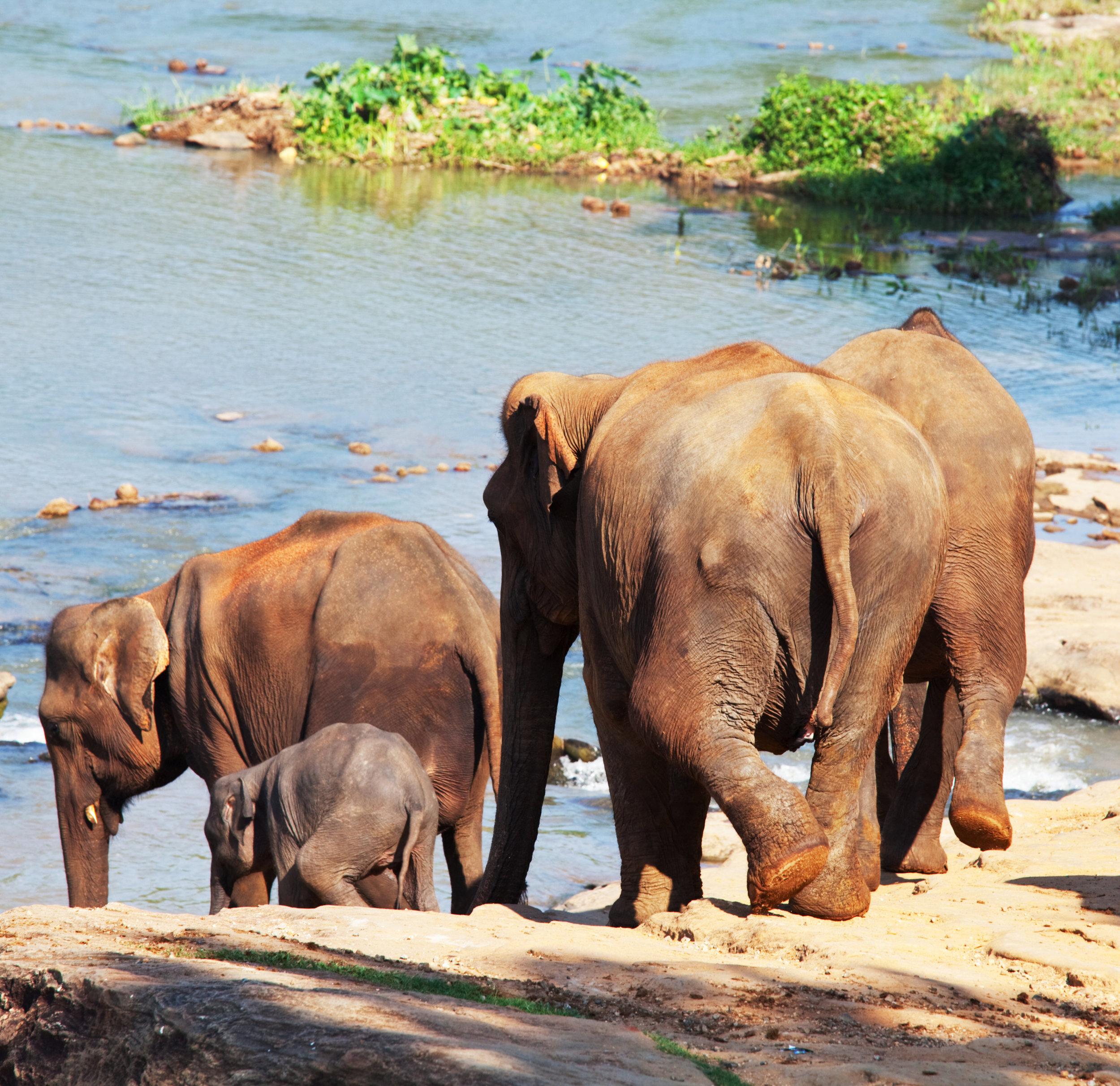 invite-to-paradise-sri-lanka-holiday-honeymoon-pinnawala-elephant-orphanage-river-4.jpg