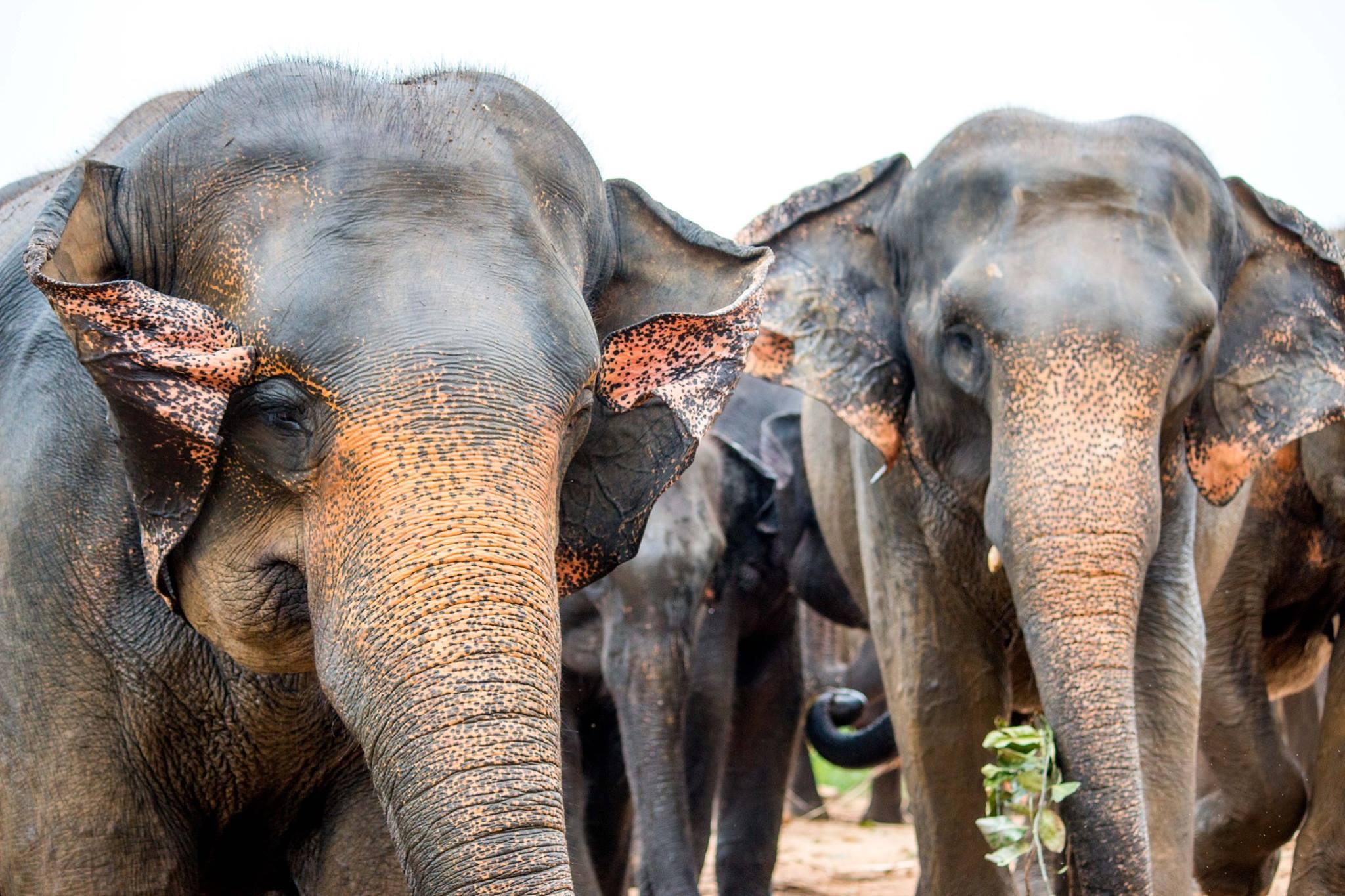 invite-to-paradise-sri-lanka-and-maldives-specialists-travel-agent-tour-operator-customer-review--feedback-joel-rhian-wildlife-eephants-1.jpg