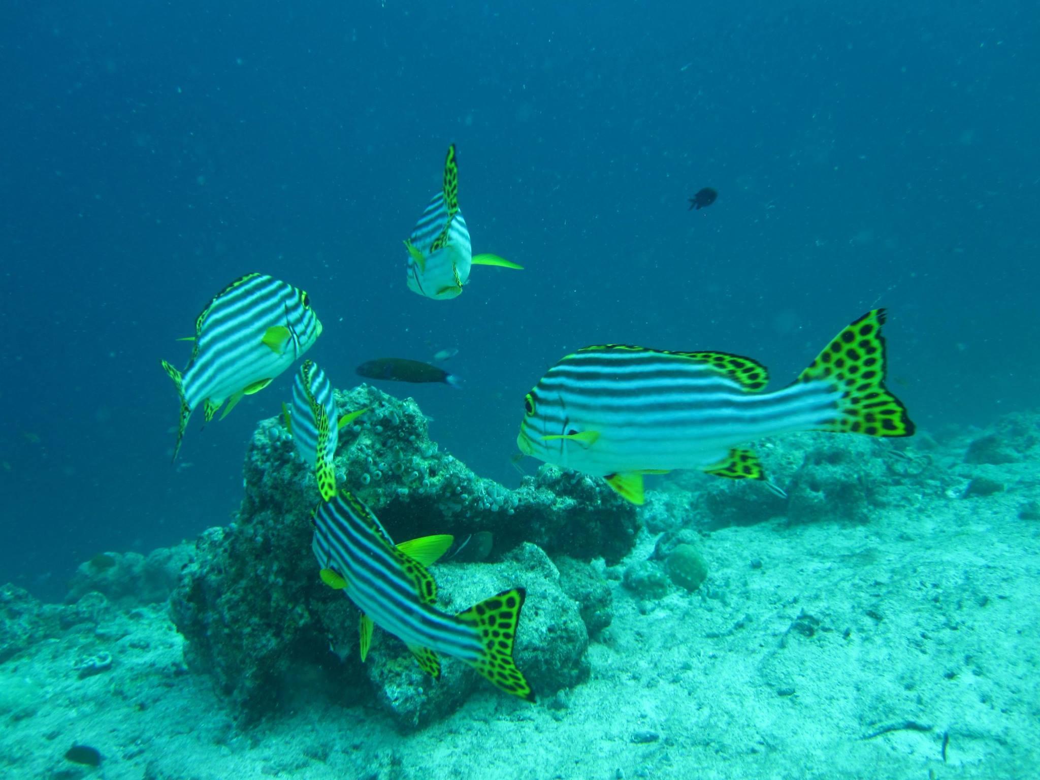 invite-to-paradise-sri-lanka-and-maldives-specialists-travel-agent-tour-operator-customer-review--feedback-joel-rhian-atmopshere-kanifushi-diving-fish.jpg