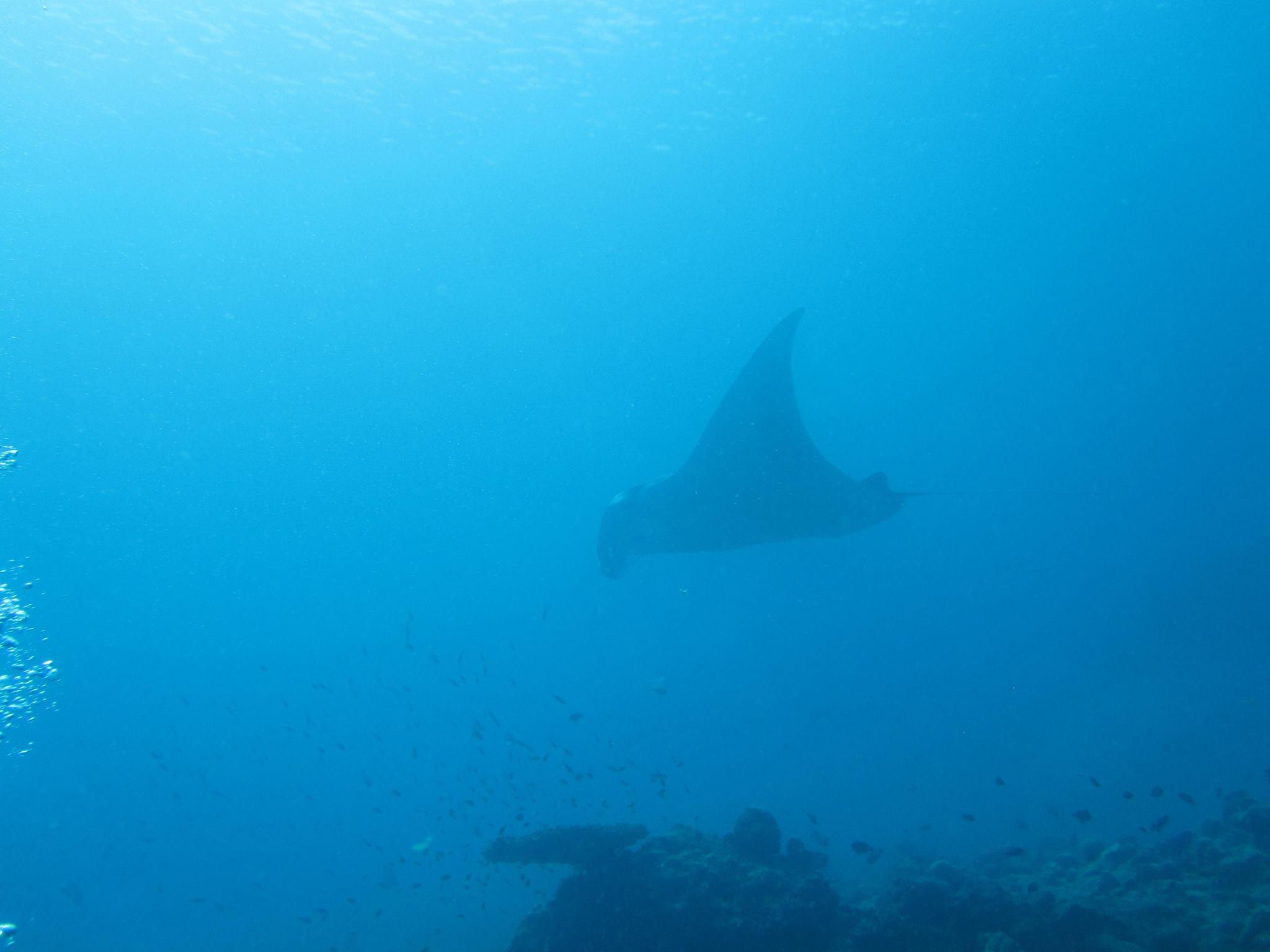 invite-to-paradise-sri-lanka-and-maldives-specialists-travel-agent-tour-operator-customer-review--feedback-joel-rhian-atmopshere-kanifushi-manta-ray.jpg