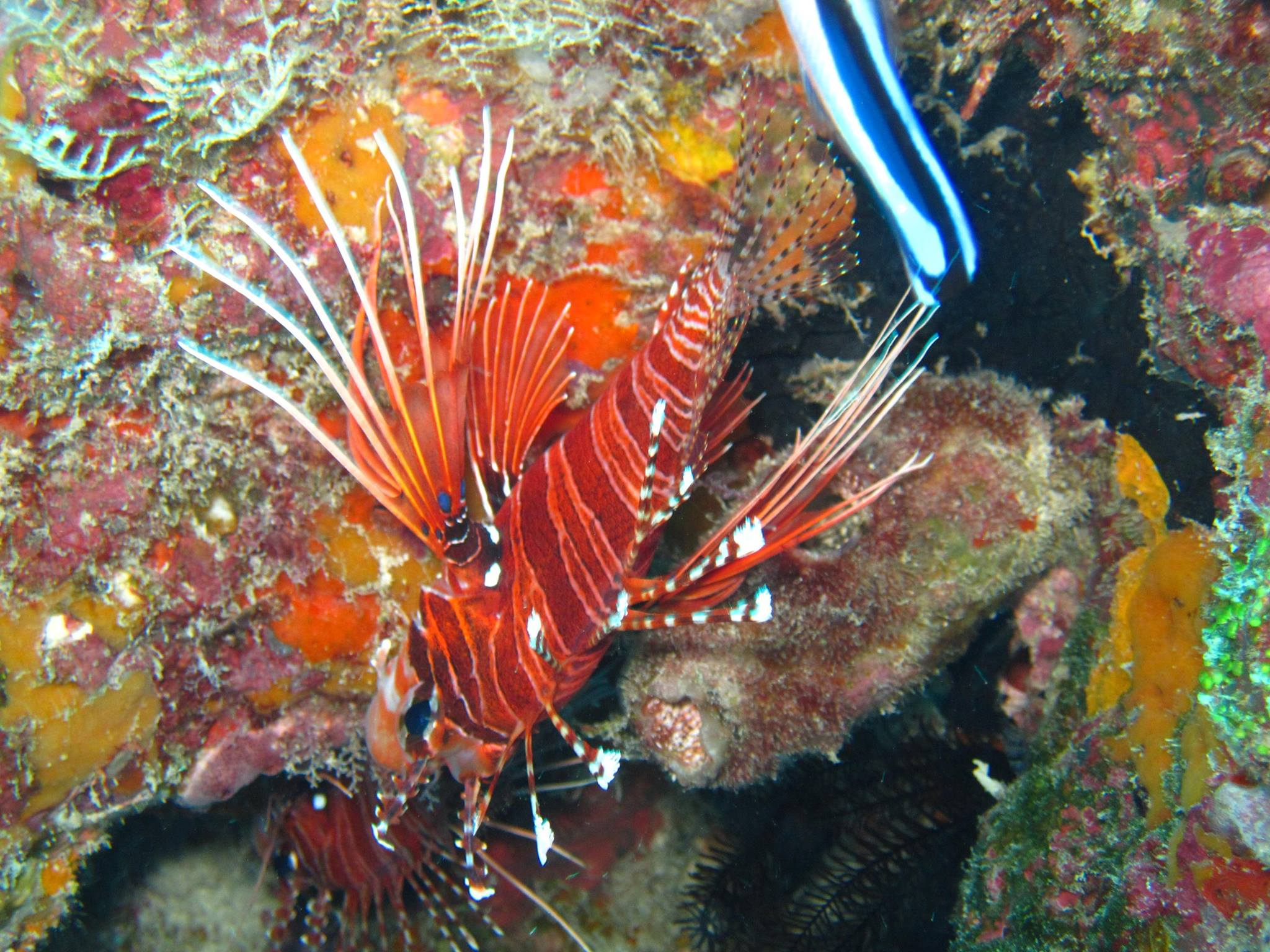 invite-to-paradise-sri-lanka-and-maldives-specialists-travel-agent-tour-operator-customer-review-feedback-joel-rhian-fish-3.jpg