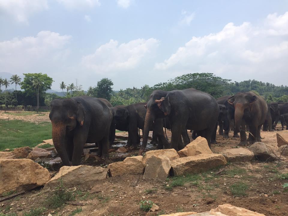 invite-to-paradise-sri-lanka-and-maldives-specialists-travel-agent-tour-operator-customer-review--feedback-joel-rhian-elephant-12.jpg