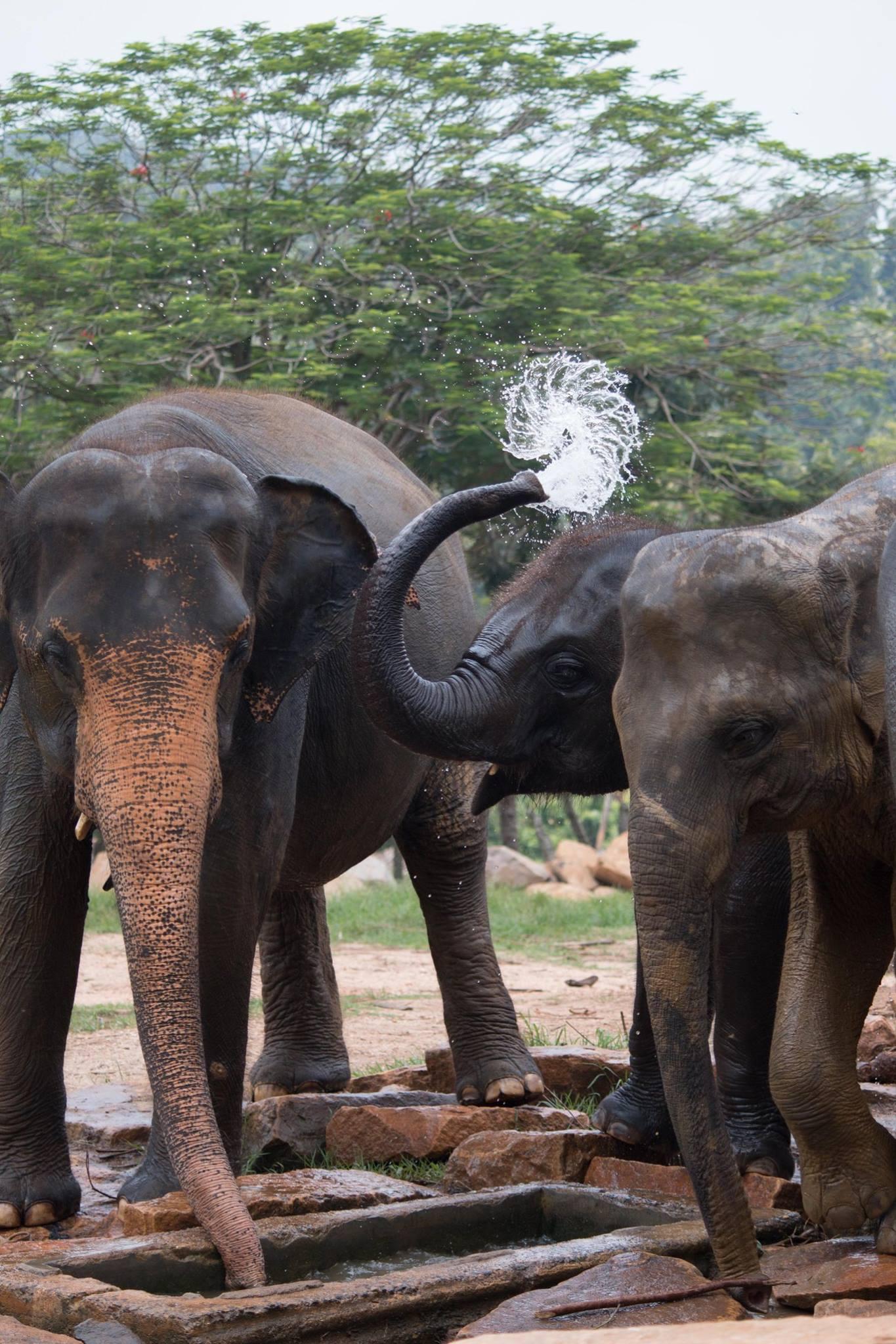 invite-to-paradise-sri-lanka-and-maldives-specialists-travel-agent-tour-operator-customer-review--feedback-joel-rhian-elephants-10.jpg