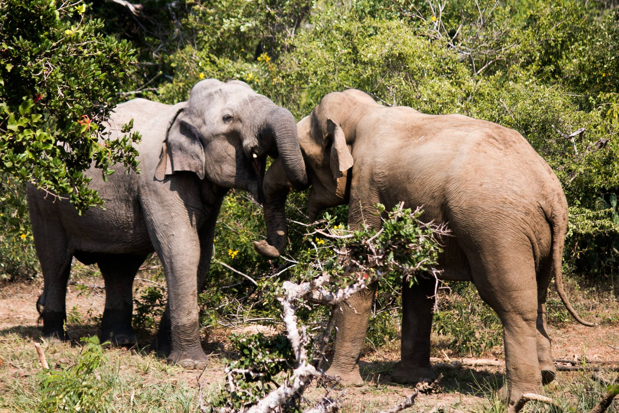 invite-to-paradise-sri-lanka-and-maldives-specialists-travel-agent-tour-operator-customer-review--feedback-joel-rhian-elephants-7.jpg