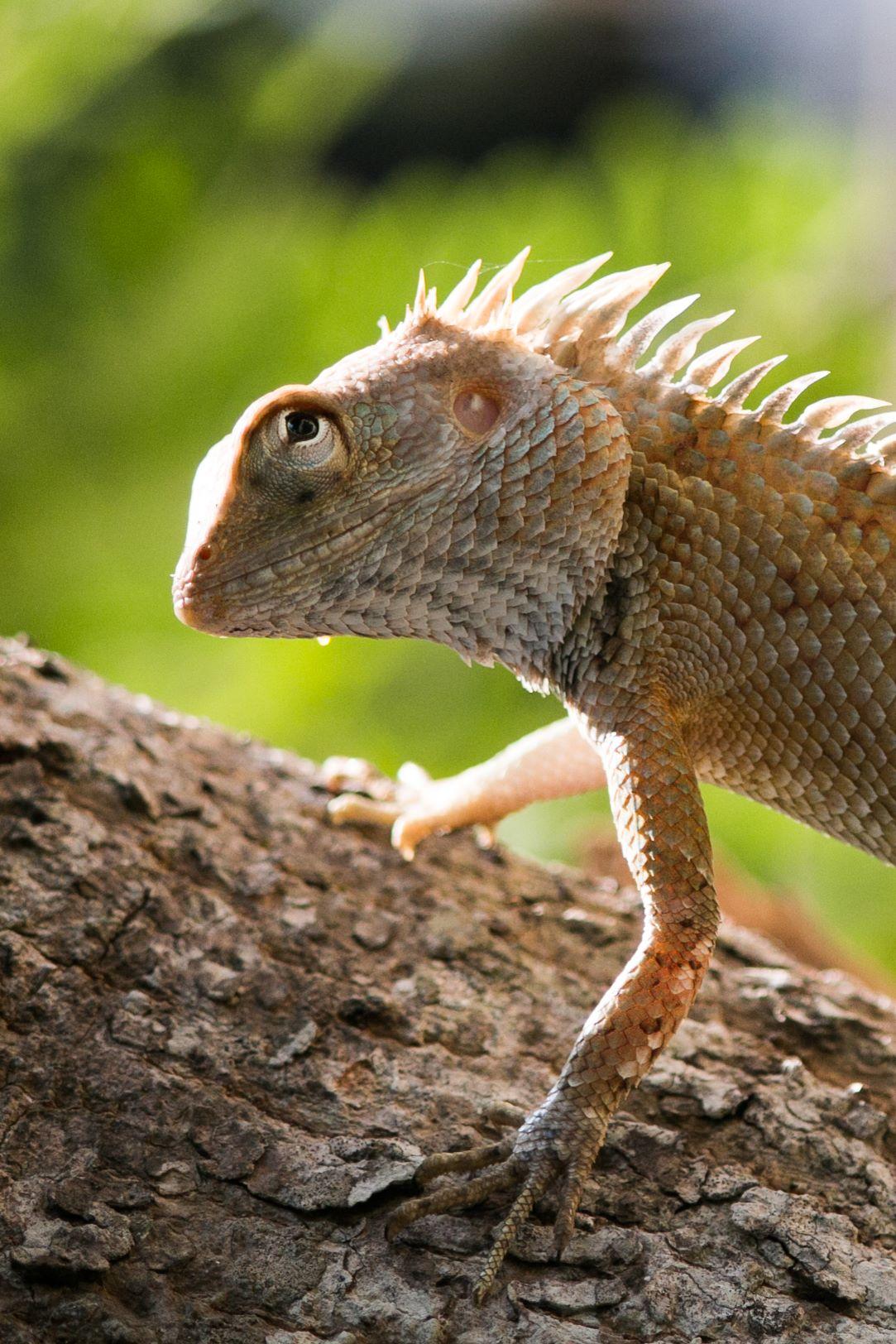 invite-to-paradise-sri-lanka-and-maldives-specialists-travel-agent-tour-operator-customer-review--feedback-joel-rhian-lizard-4.jpg