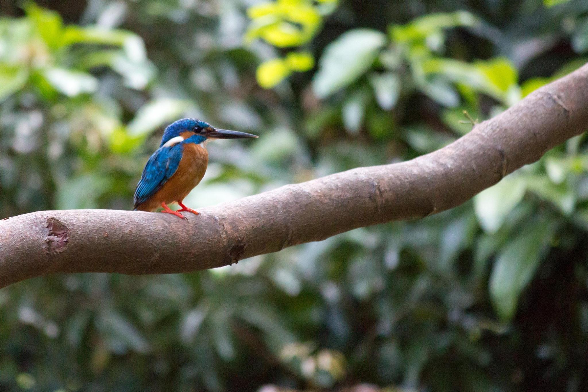 invite-to-paradise-sri-lanka-and-maldives-specialists-travel-agent-tour-operator-customer-review--feedback-joel-rhian-kingfisher-2.jpg