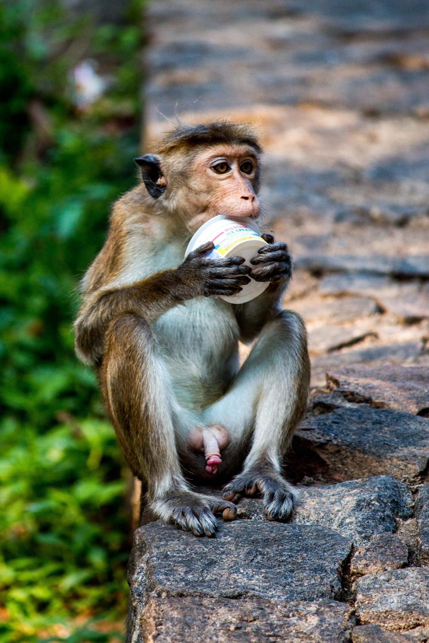 invite-to-paradise-sri-lanka-and-maldives-specialists-travel-agent-tour-operator-customer-review--feedback-joel-rhian-monkey-5.jpg