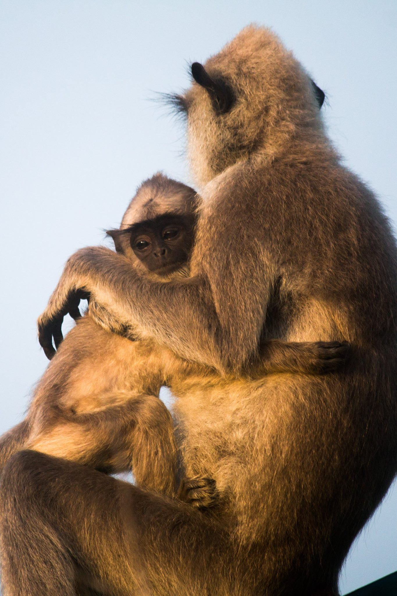 invite-to-paradise-sri-lanka-and-maldives-specialists-travel-agent-tour-operator-customer-review--feedback-joel-rhian-monkey-7.jpg