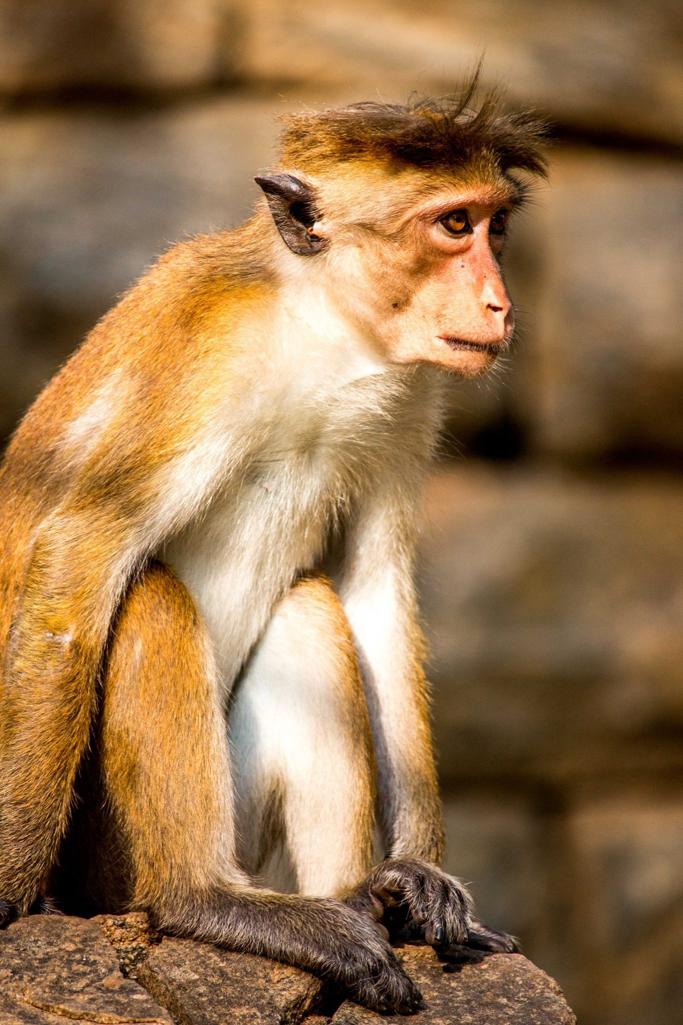 invite-to-paradise-sri-lanka-and-maldives-specialists-travel-agent-tour-operator-customer-review--feedback-joel-rhian-monkey-6.jpg