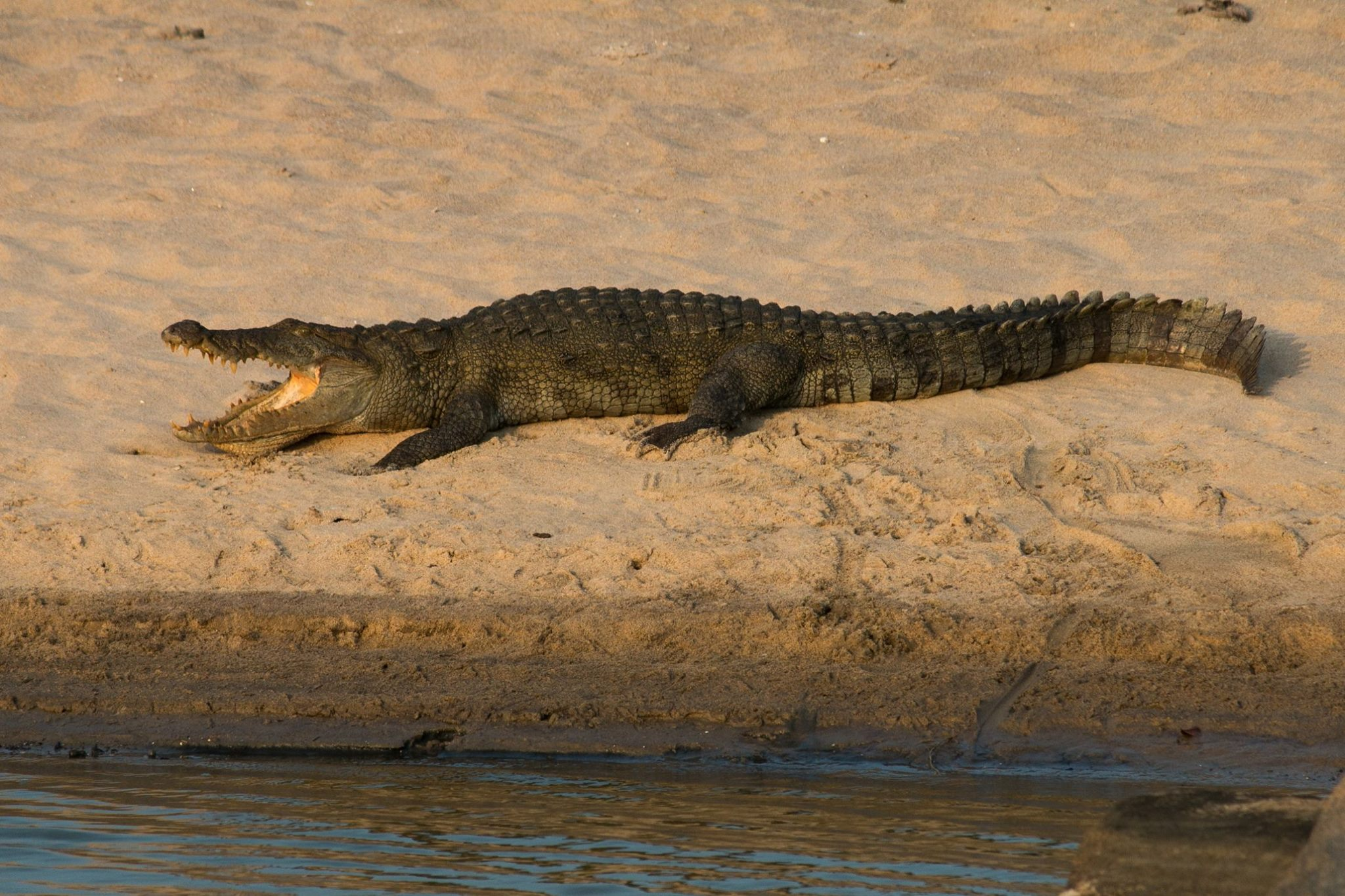 invite-to-paradise-sri-lanka-and-maldives-specialists-travel-agent-tour-operator-customer-review-feedback-joel-rhian-crocodile-2.jpg