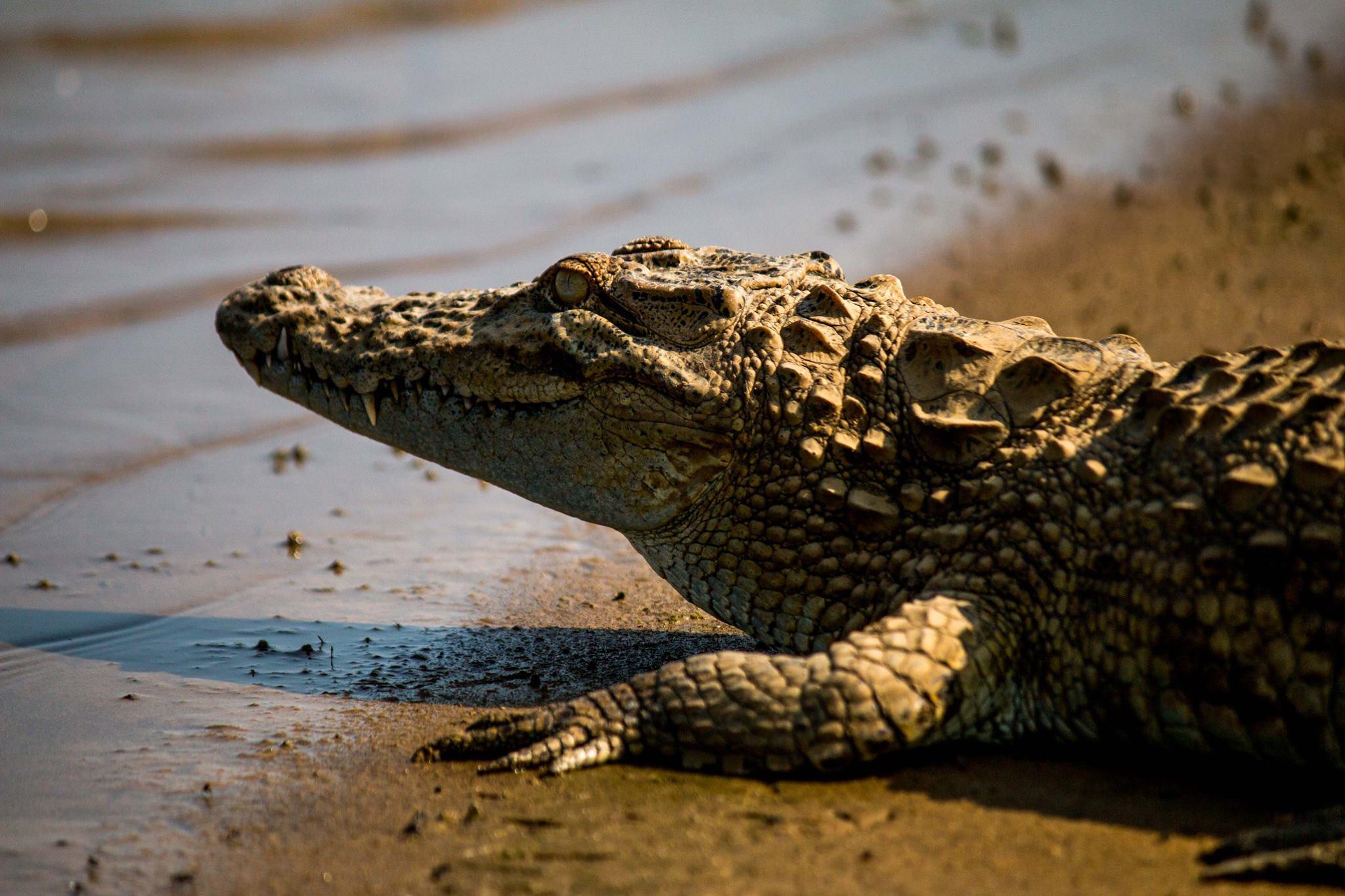 invite-to-paradise-sri-lanka-and-maldives-specialists-travel-agent-tour-operator-customer-review-feedback-joel-rhian-crocodile-4.jpg