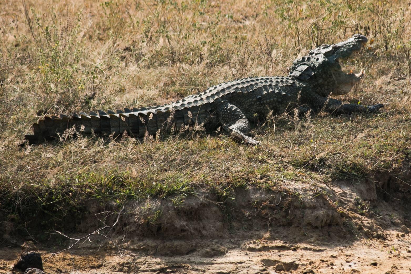 invite-to-paradise-sri-lanka-and-maldives-specialists-travel-agent-tour-operator-customer-review-feedback-joel-rhian-crocodile.jpg