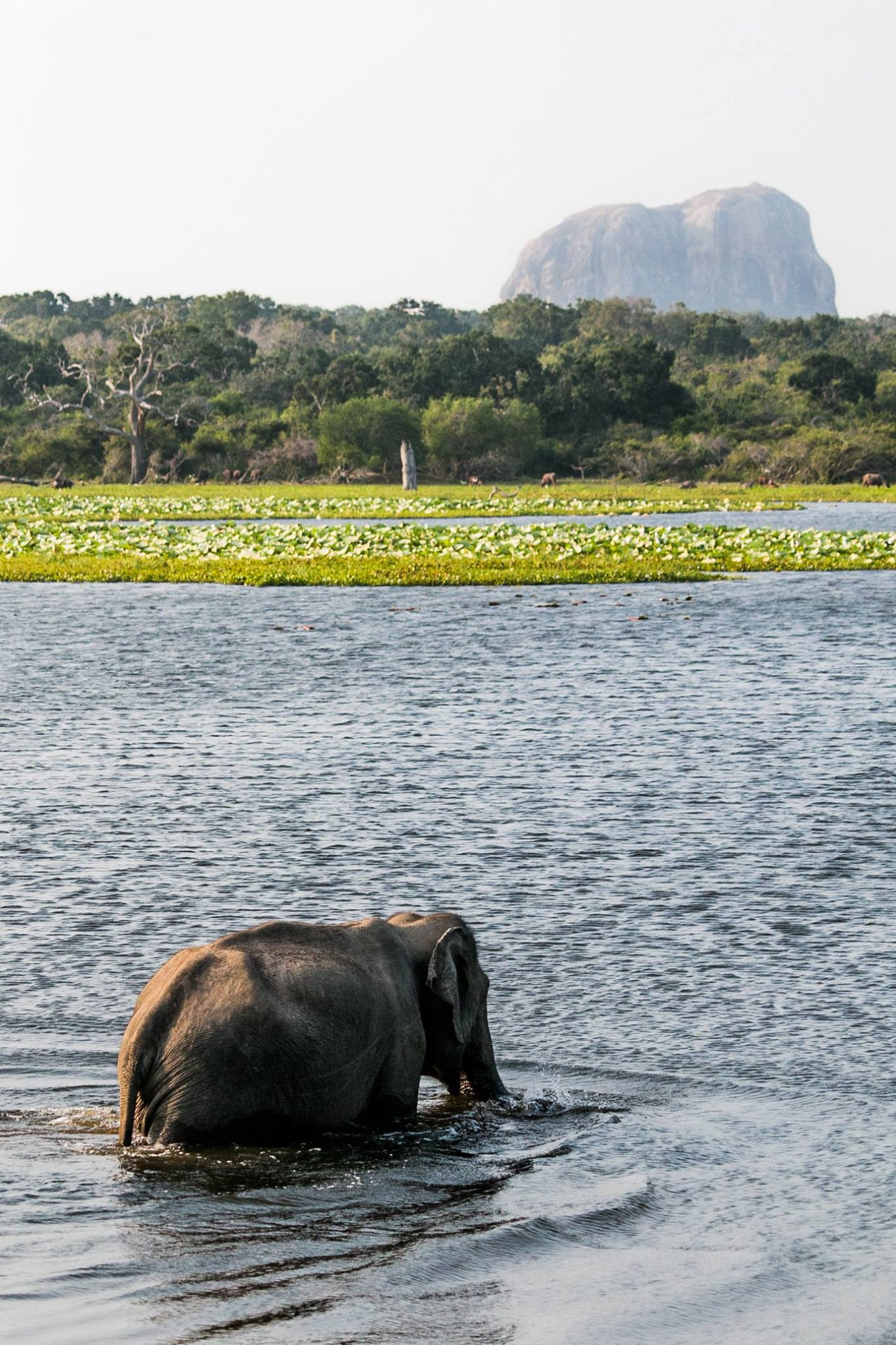 invite-to-paradise-sri-lanka-and-maldives-specialists-travel-agent-tour-operator-customer-review-feedback-joel-rhian-elephant-7.jpg