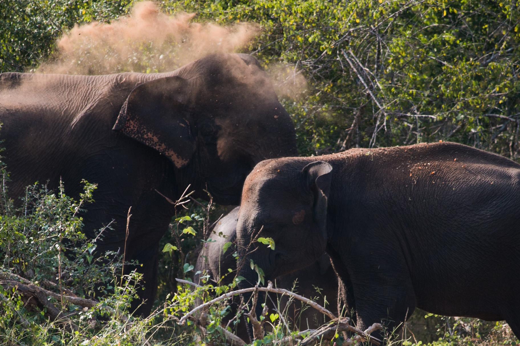 invite-to-paradise-sri-lanka-and-maldives-specialists-travel-agent-tour-operator-customer-review-feedback-joel-rhian-elephants-2.jpg