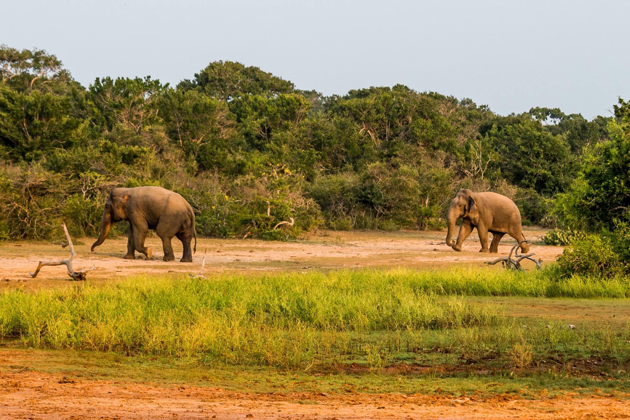 invite-to-paradise-sri-lanka-and-maldives-specialists-travel-agent-tour-operator-customer-review-feedback-joel-rhian-elephant-safari.jpg