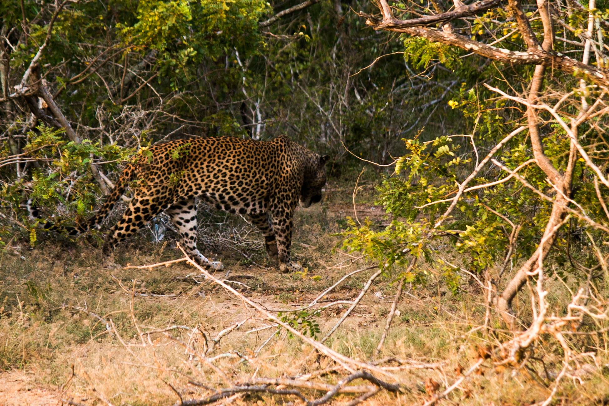 invite-to-paradise-sri-lanka-and-maldives-specialists-travel-agent-tour-operator-customer-review-feedback-joel-rhian-leopard-safari-2.jpg
