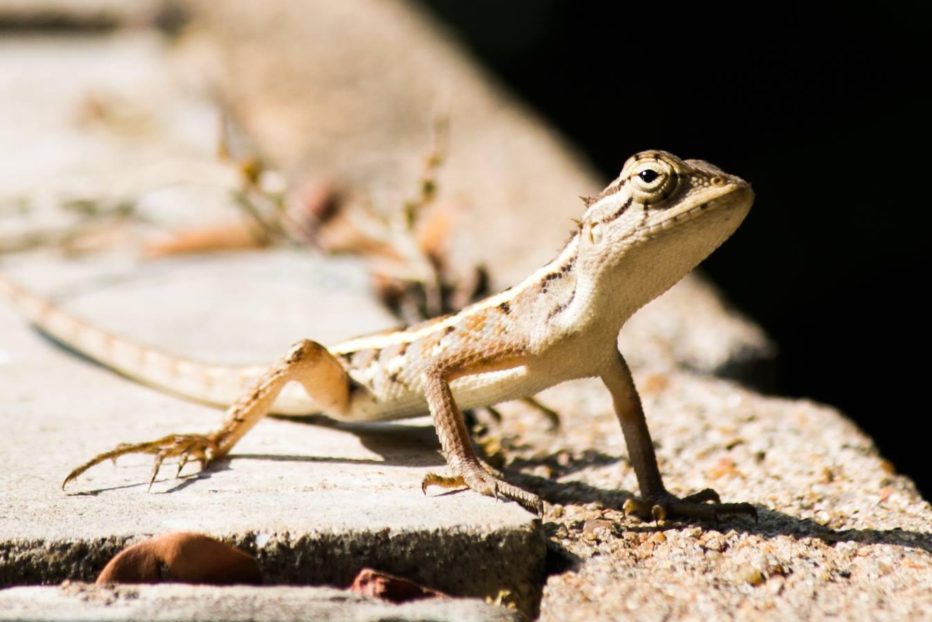 invite-to-paradise-sri-lanka-and-maldives-specialists-travel-agent-tour-operator-customer-review-feedback-joel-rhian-lizard.jpg