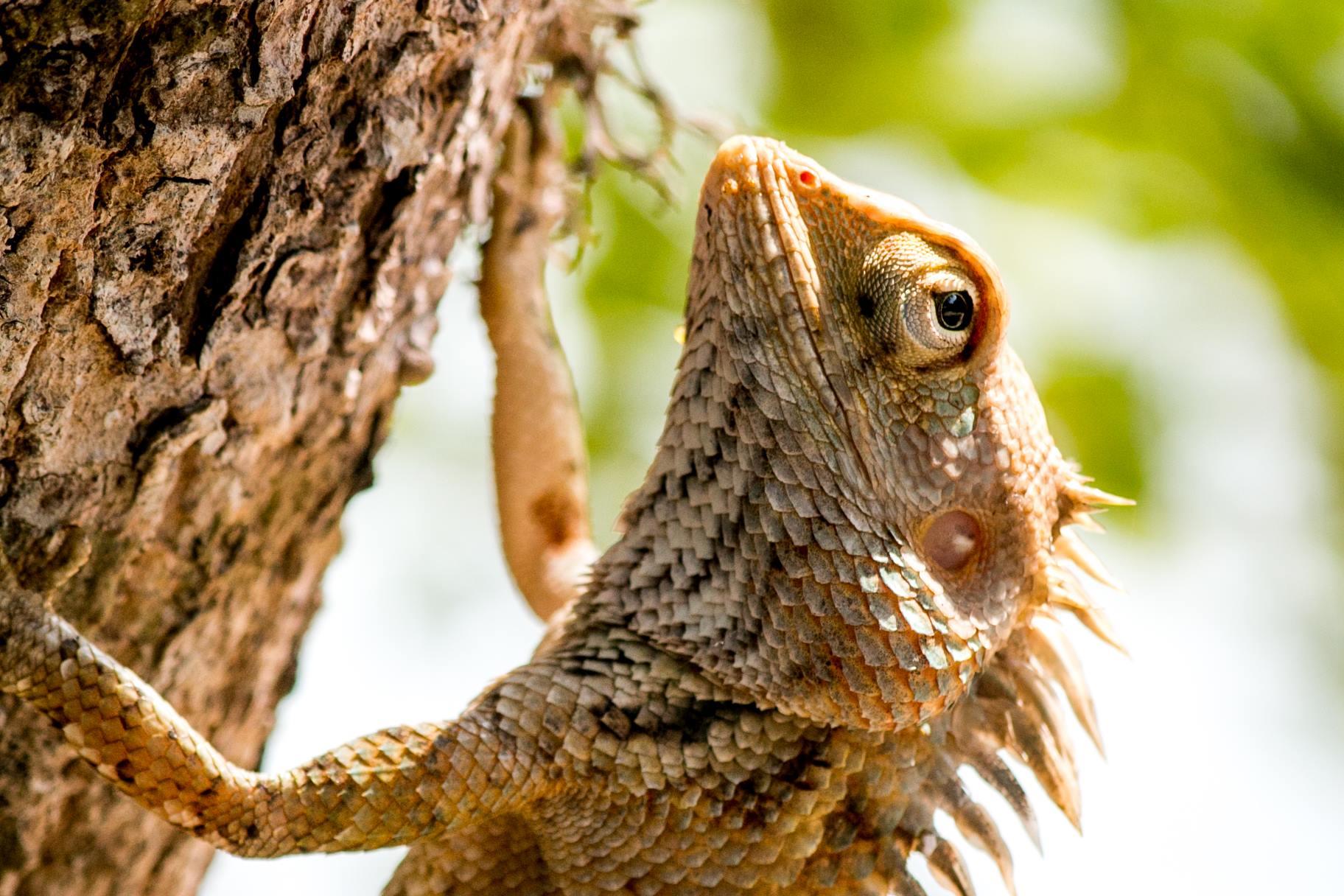 invite-to-paradise-sri-lanka-and-maldives-specialists-travel-agent-tour-operator-customer-review-feedback-joel-rhian-lizard-2.jpg