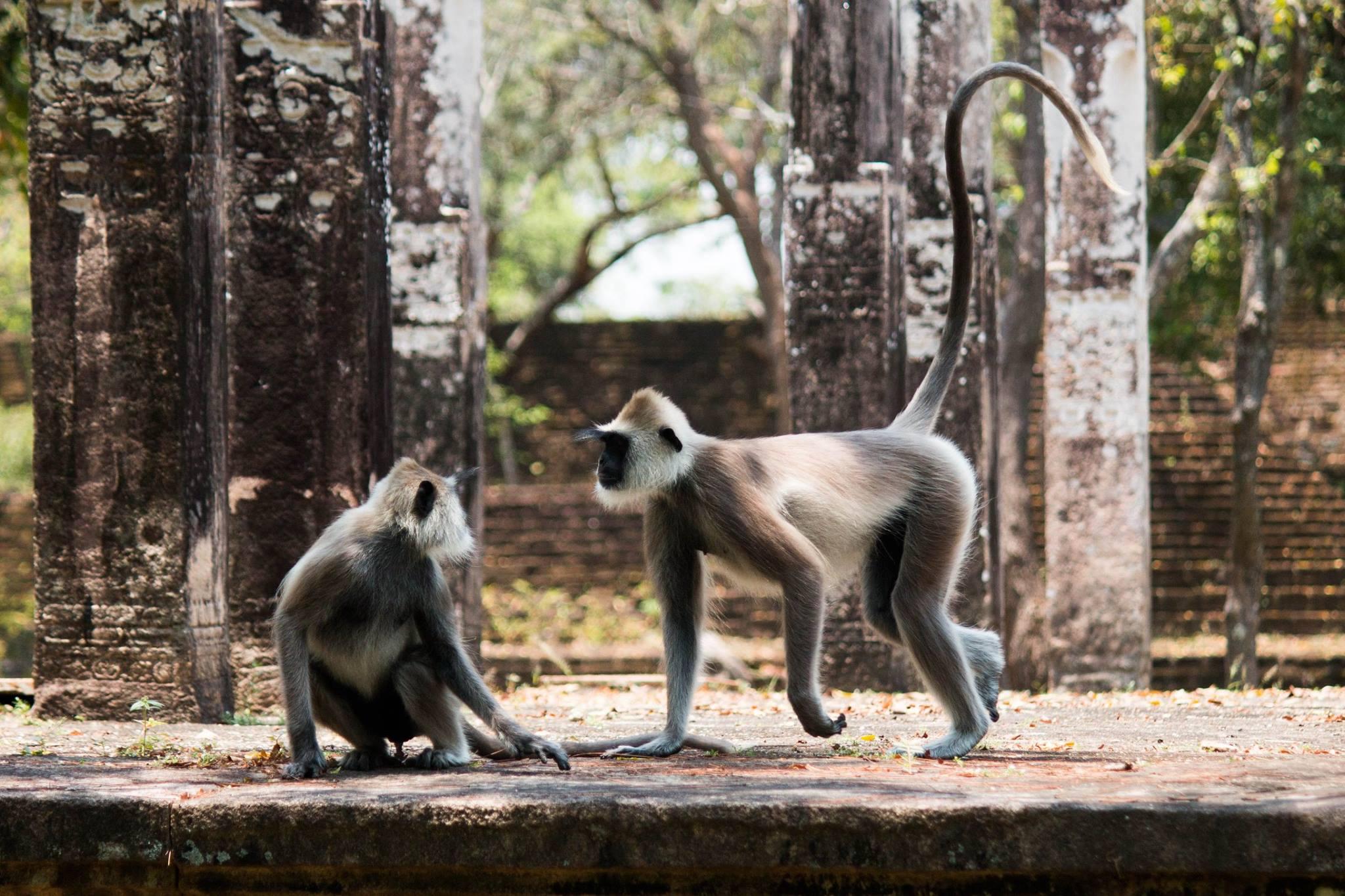 invite-to-paradise-sri-lanka-and-maldives-specialists-travel-agent-tour-operator-customer-review-feedback-joel-rhian-monkey-2.jpg