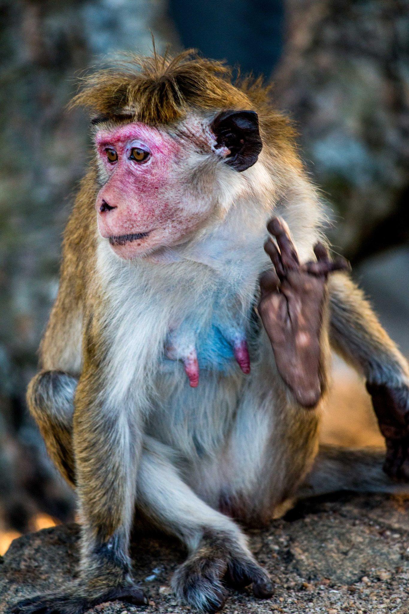 invite-to-paradise-sri-lanka-and-maldives-specialists-travel-agent-tour-operator-customer-review-feedback-joel-rhian-monkey-3.jpg