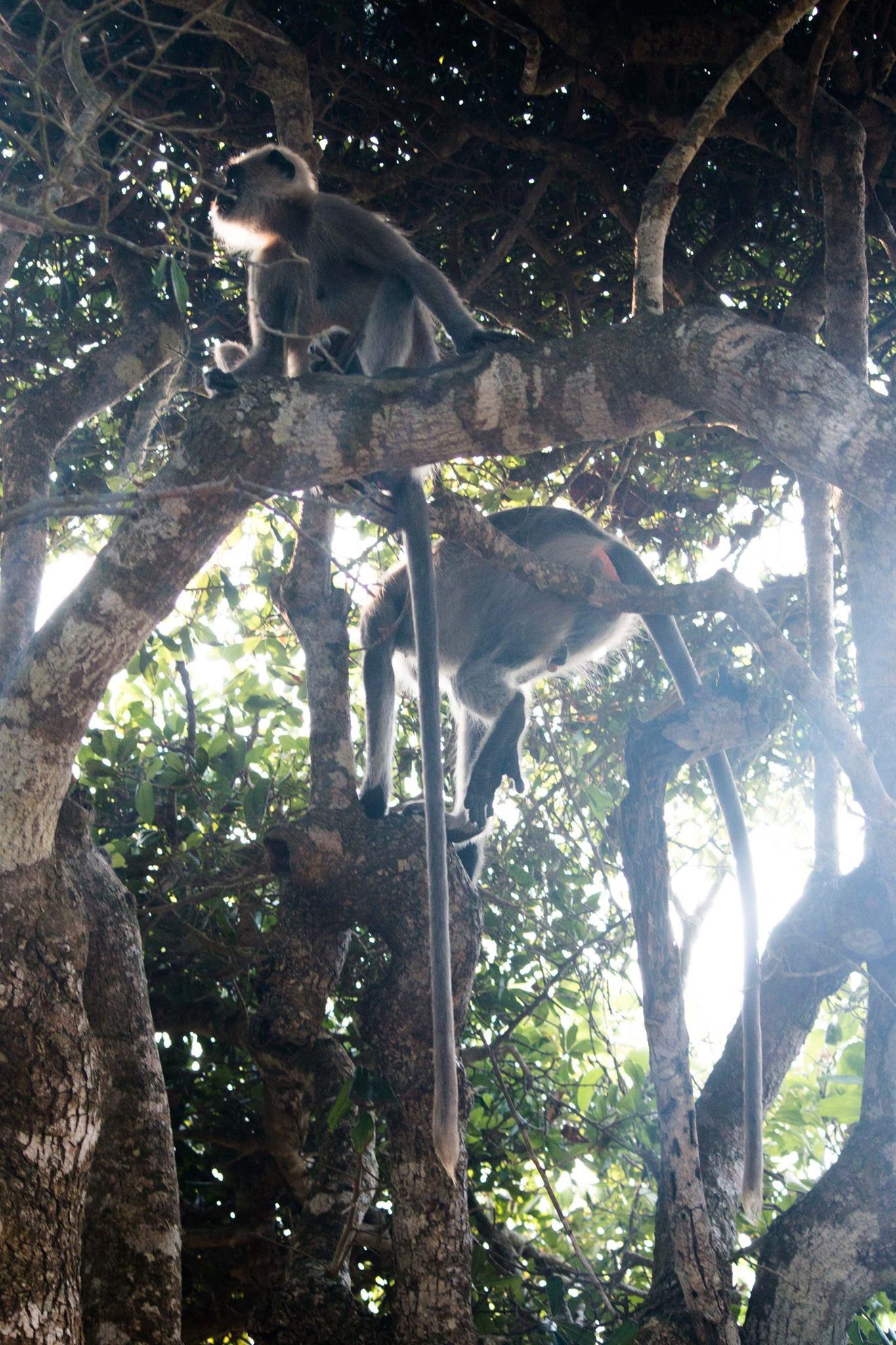 invite-to-paradise-sri-lanka-and-maldives-specialists-travel-agent-tour-operator-customer-review--feedback-joel-rhian-monkey-10.jpg