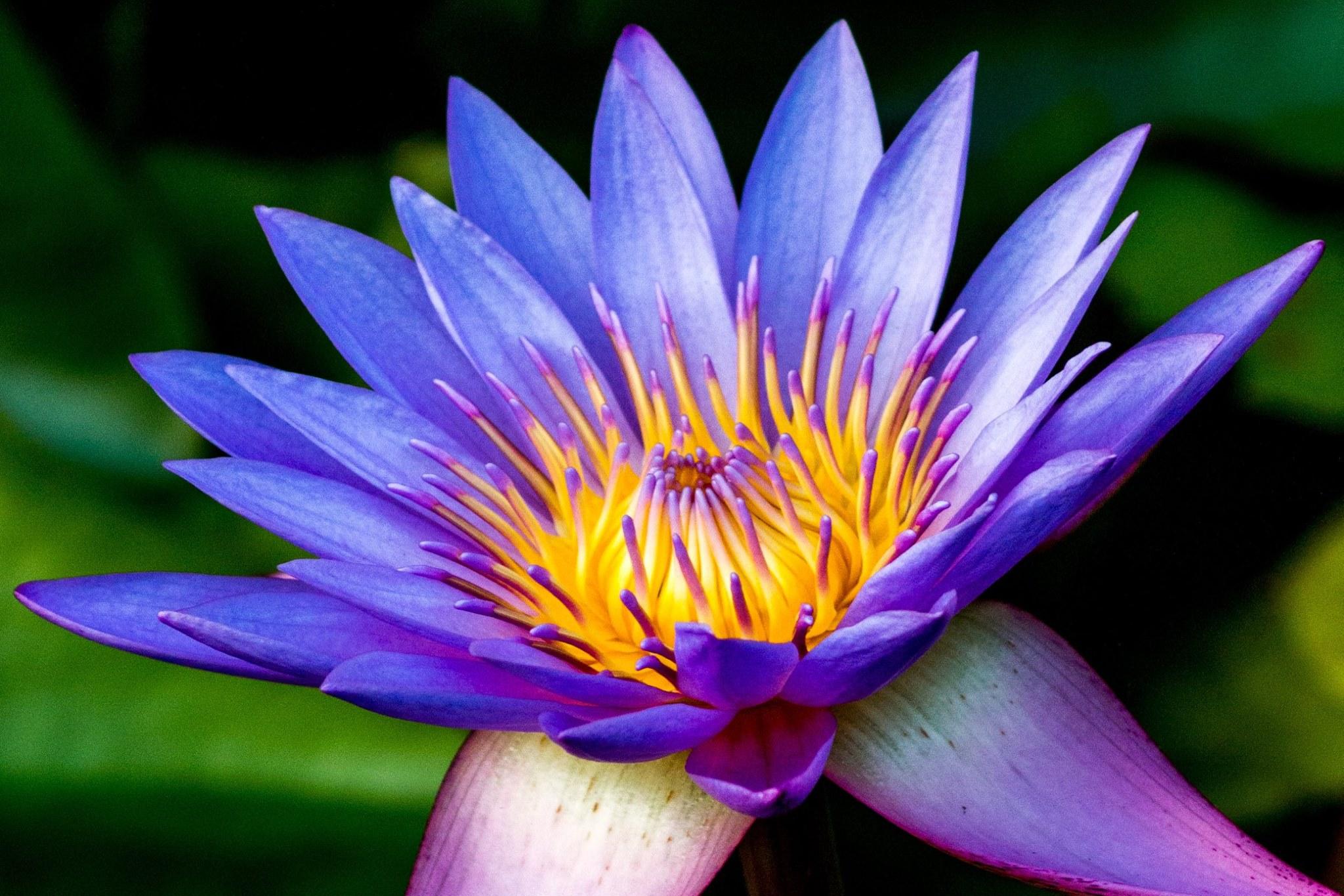 invite-to-paradise-sri-lanka-and-maldives-specialists-travel-agent-tour-operator-customer-review--feedback-joel-rhian-temple-flower.jpg