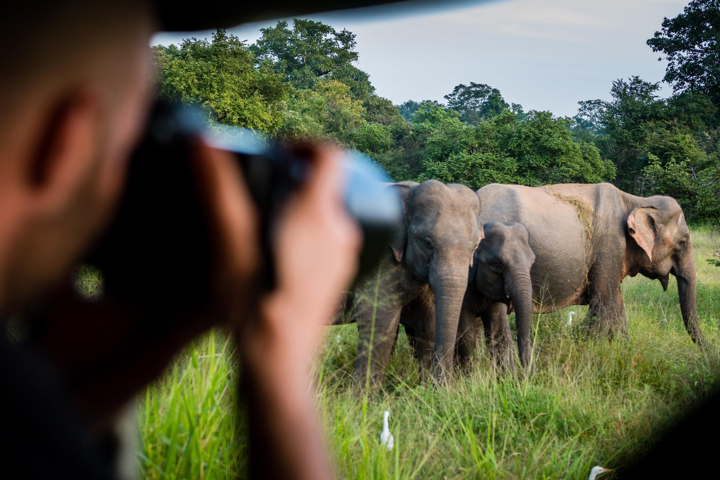 Wildlife - in Sri Lanka