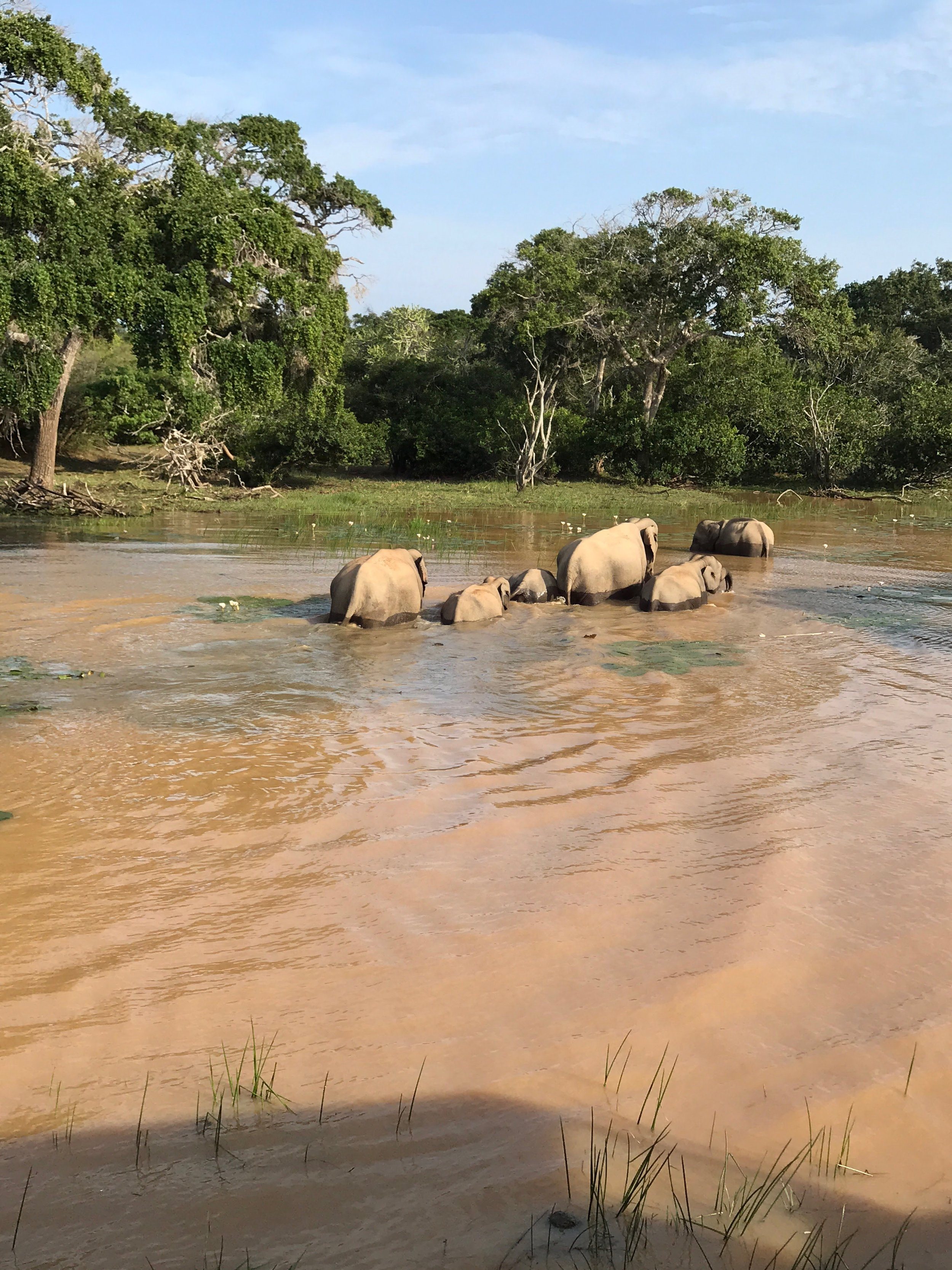 invite-to-paradise-maldives-sri-lanka-specialists-experts-travel-agent-tour-operator-customer-feedback-lucas-emily-fenning-elephant-safari.jpg