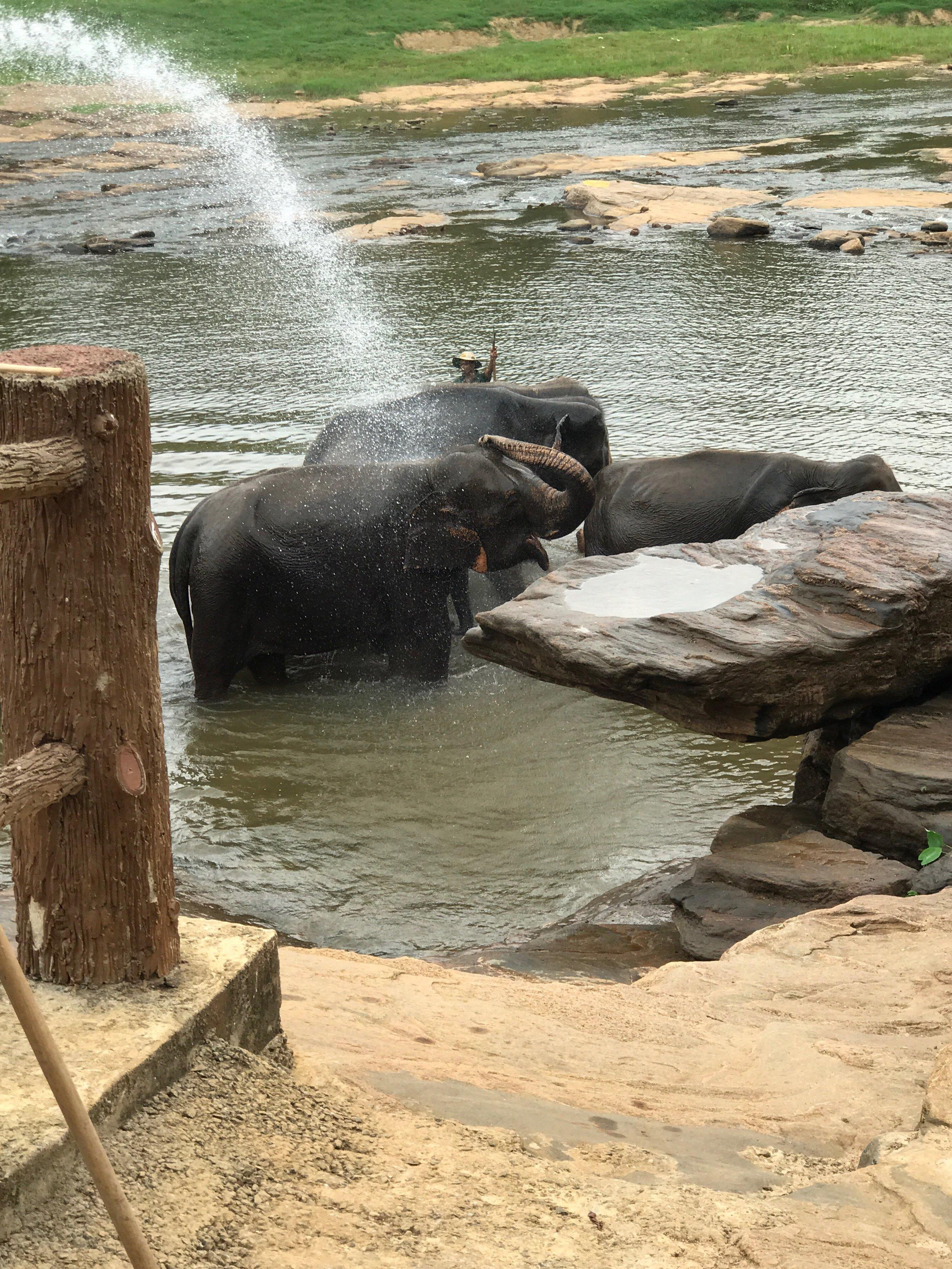 invite-to-paradise-maldives-sri-lanka-specialists-experts-travel-agent-tour-operator-customer-feedback-lucas-emily-fenning-elephant-orphanage-2.jpg