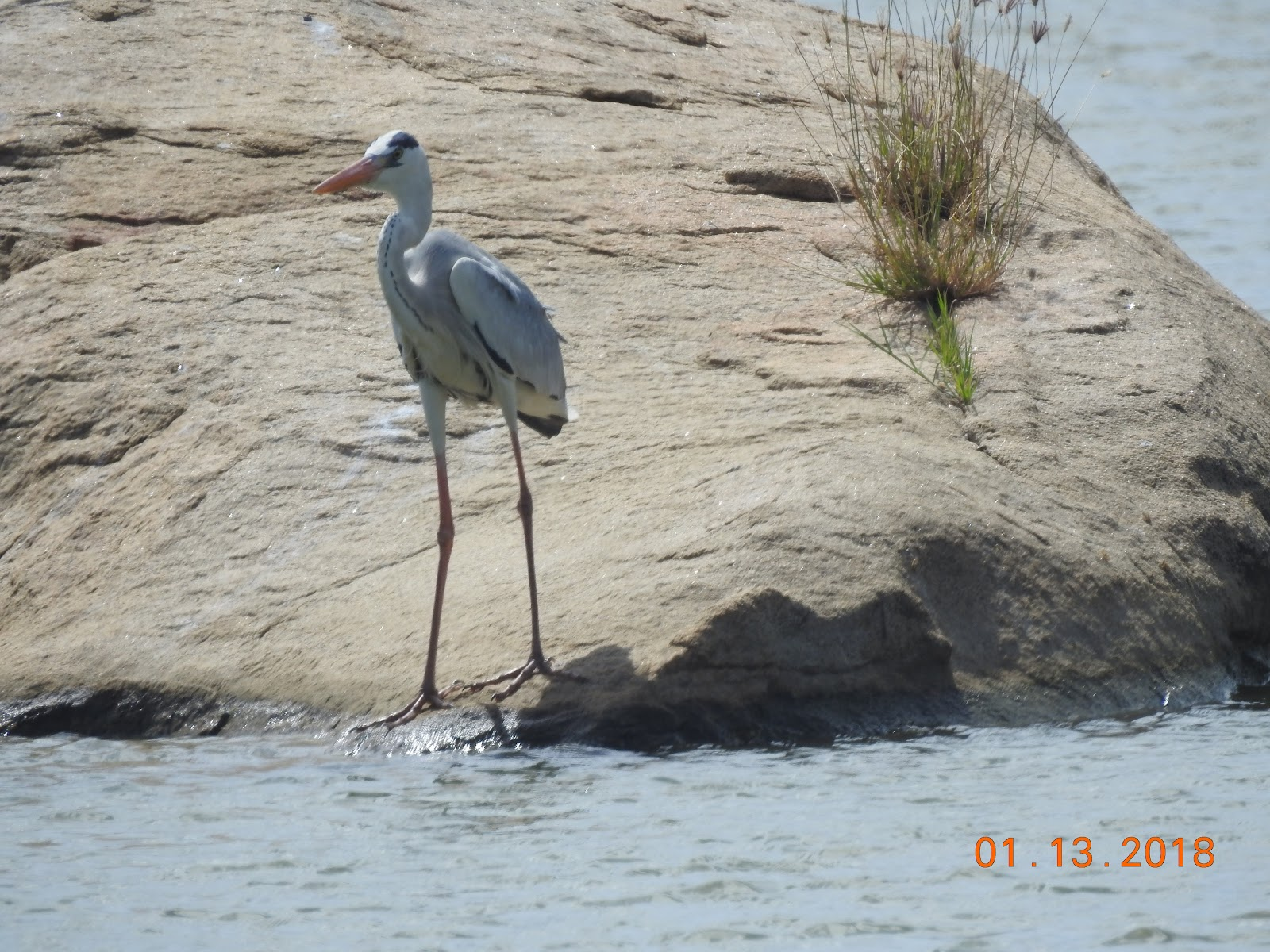 invite-to-paradise-sri-lanka-maldives-holiday-specialists-nutan-vidyut-patel-bird.jpg