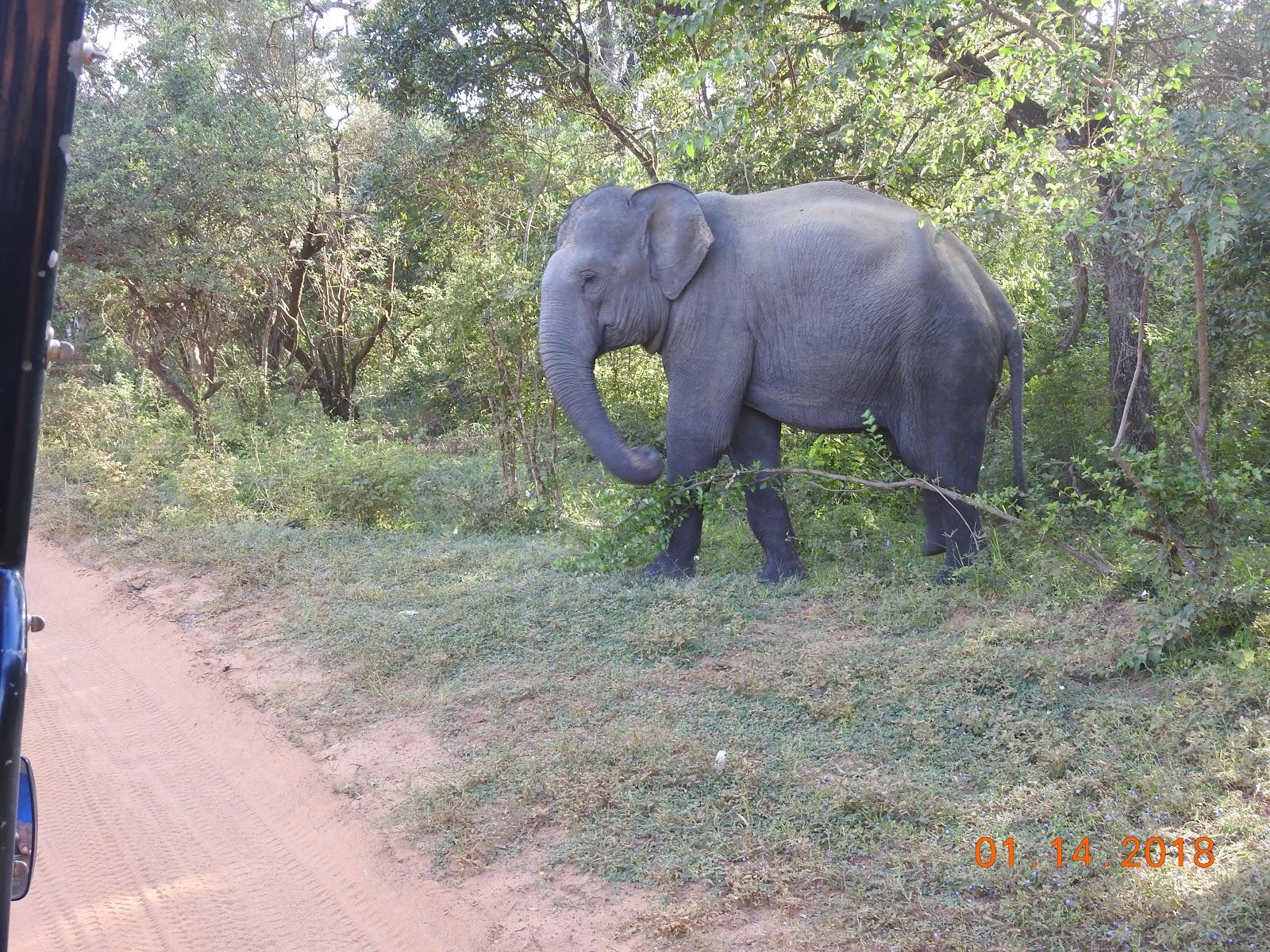 invite-to-paradise-sri-lanka-maldives-holiday-specialists-nutan-vidyut-patel-elephant-safari.jpg