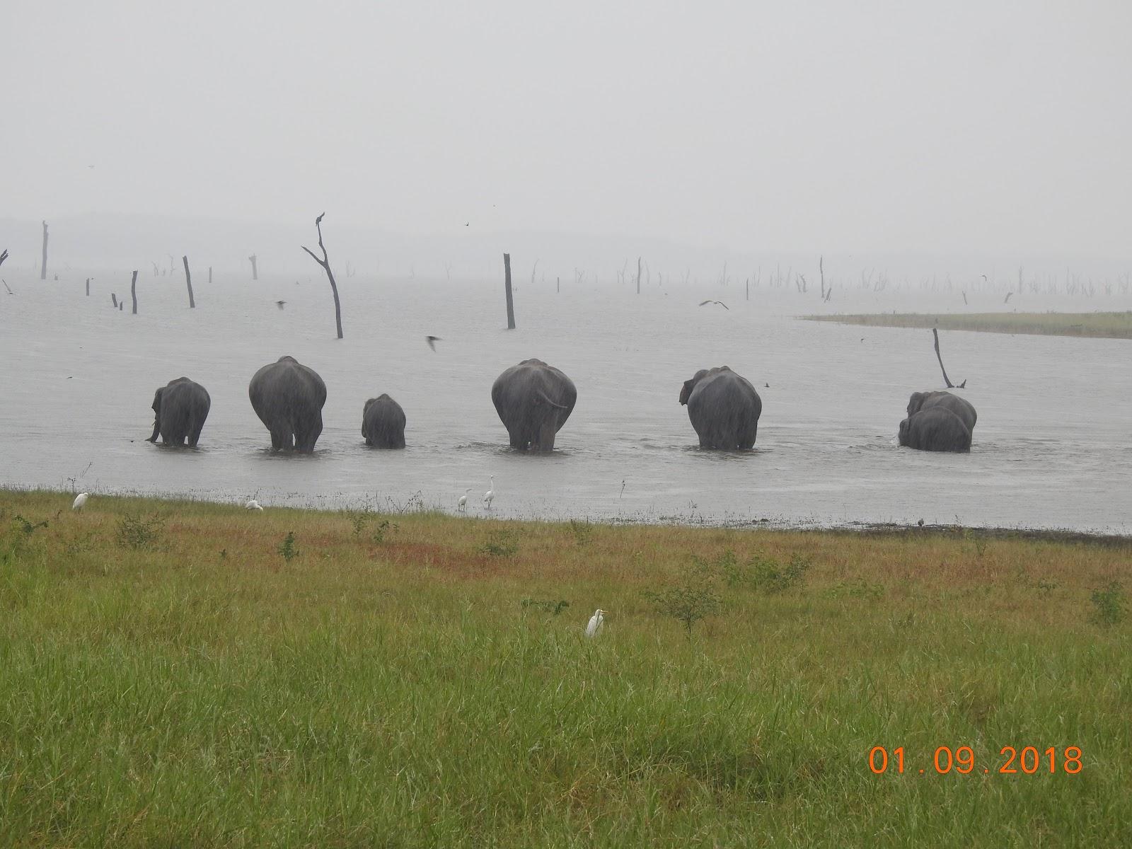 invite-to-paradise-sri-lanka-maldives-holiday-specialists-nutan-vidyut-patel-elephants-3.jpg